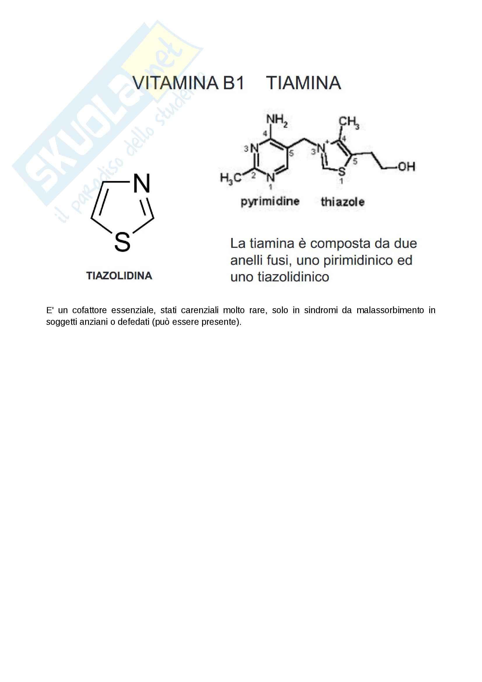 Tiamina e nozioni, Biochimica