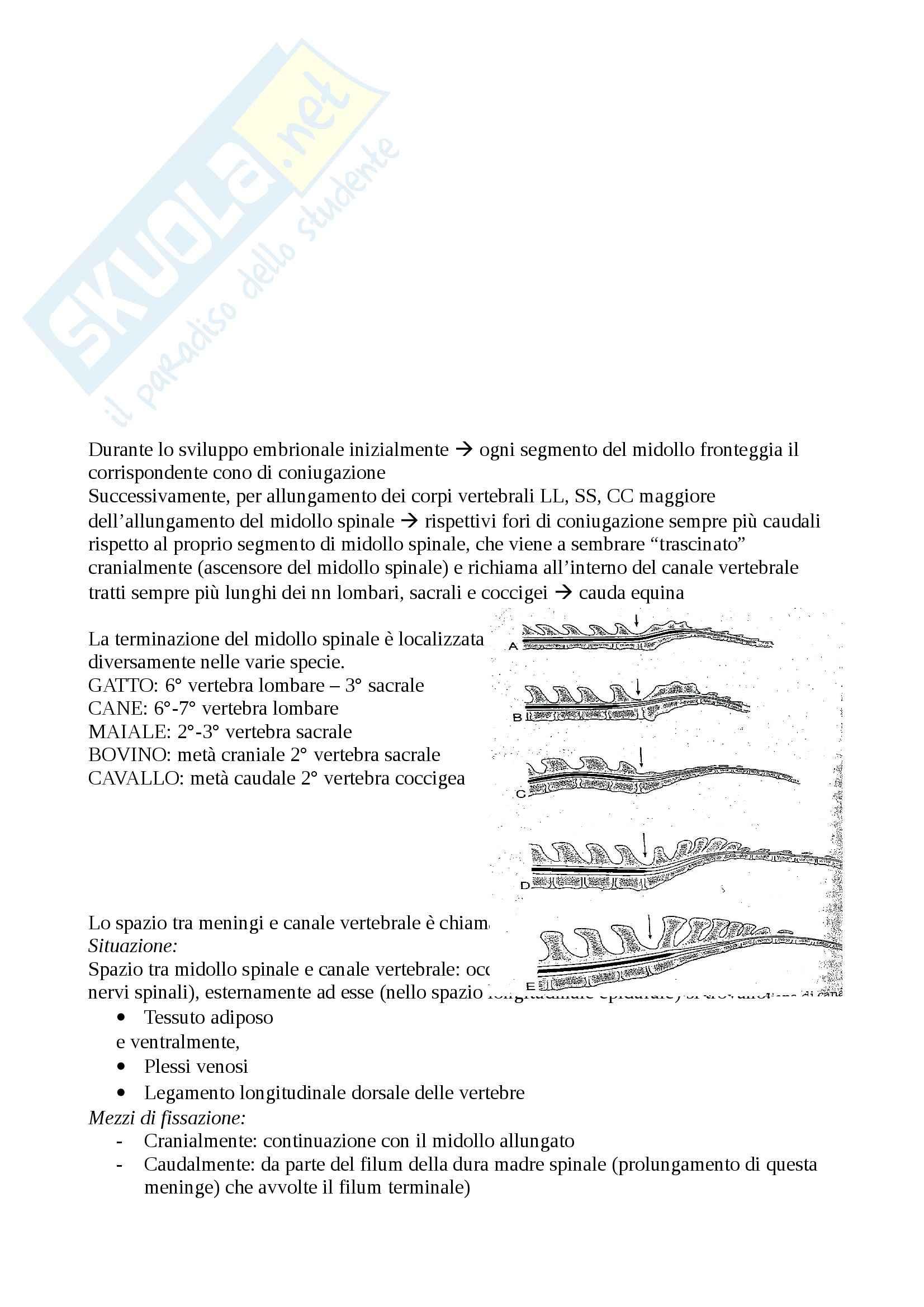 Embriologia del sistema nervoso centrale: Appunti di Anatomia comparata Pag. 6
