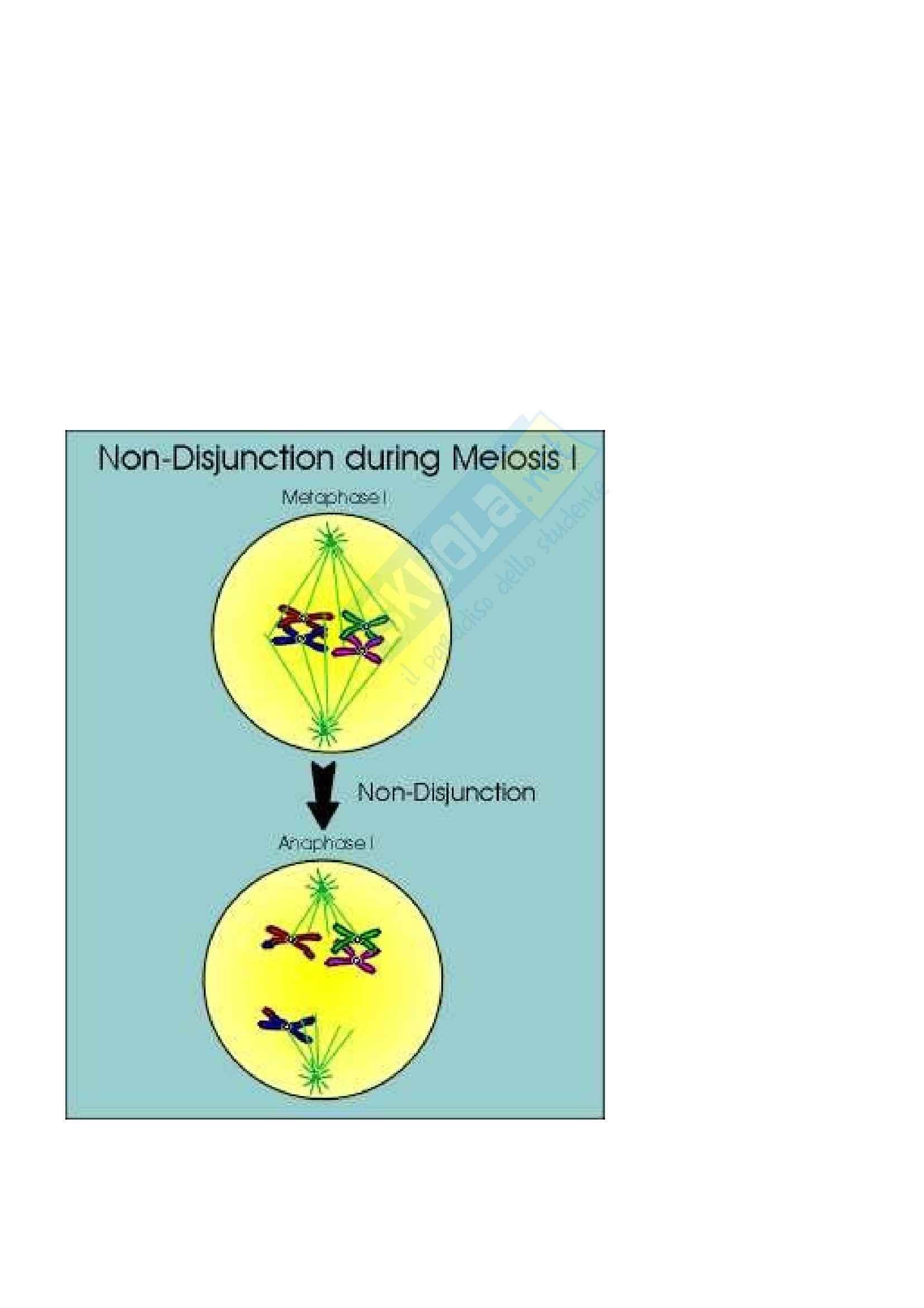 Basi biologiche e genetica umana - mutazioni geniche Pag. 51