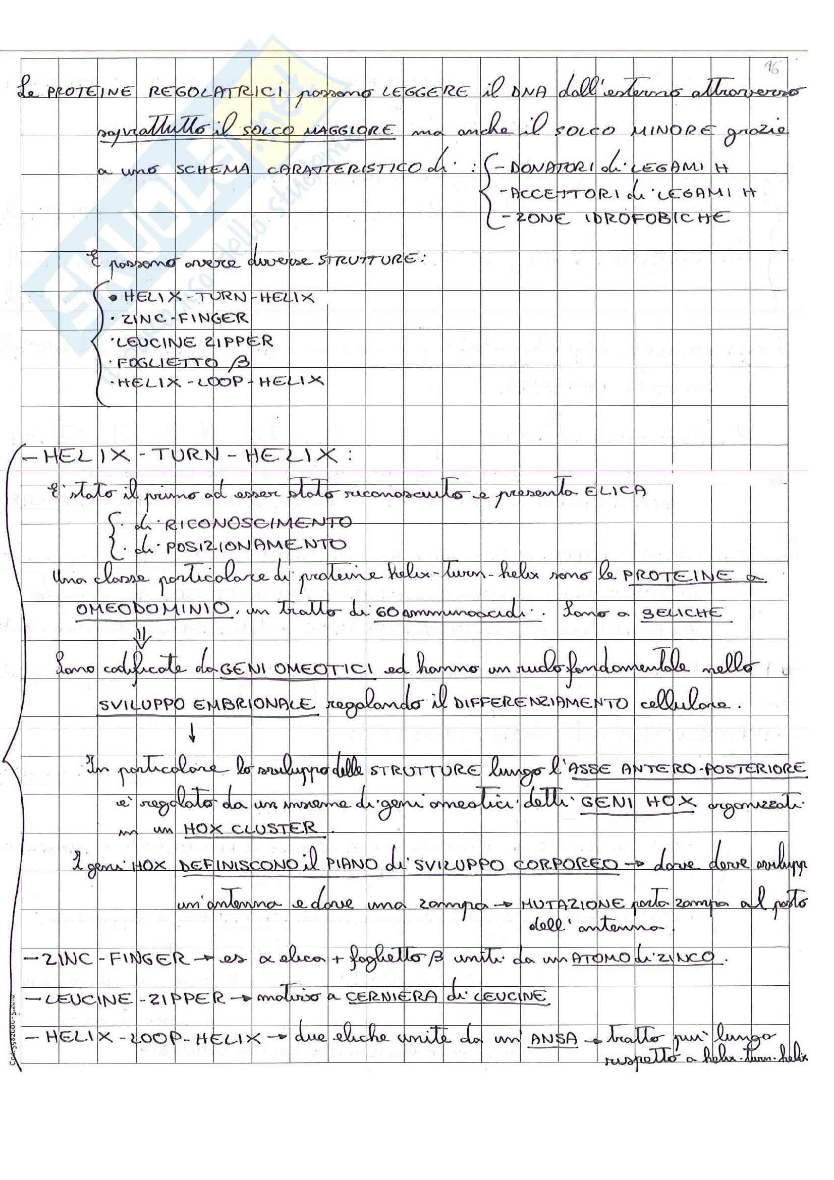 Lezioni, Biologia molecolare Pag. 91