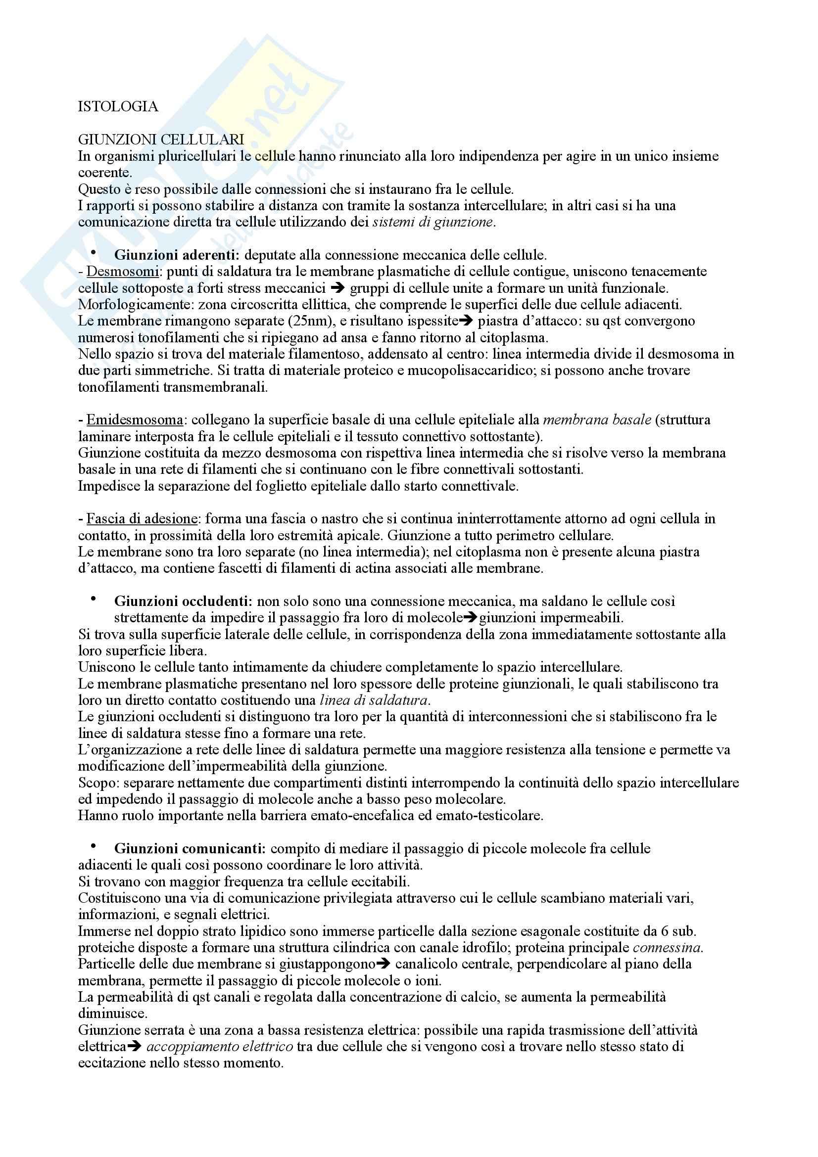 appunto F. Riva Istologia