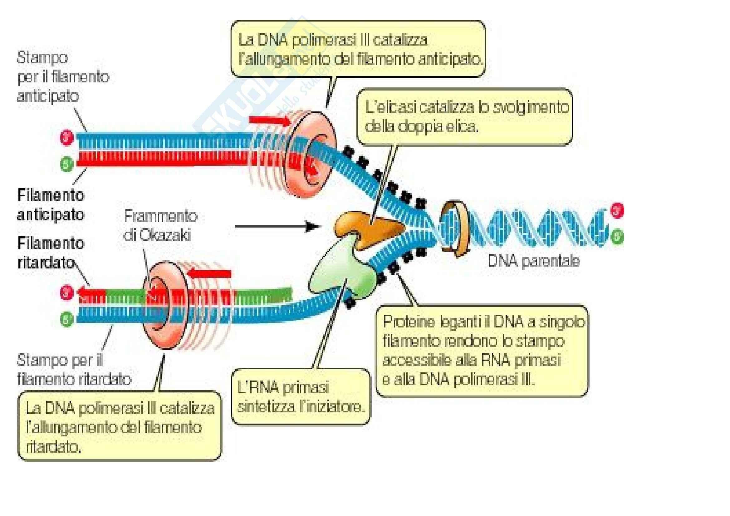 Biologia – Lezione 8 - Slides Pag. 21