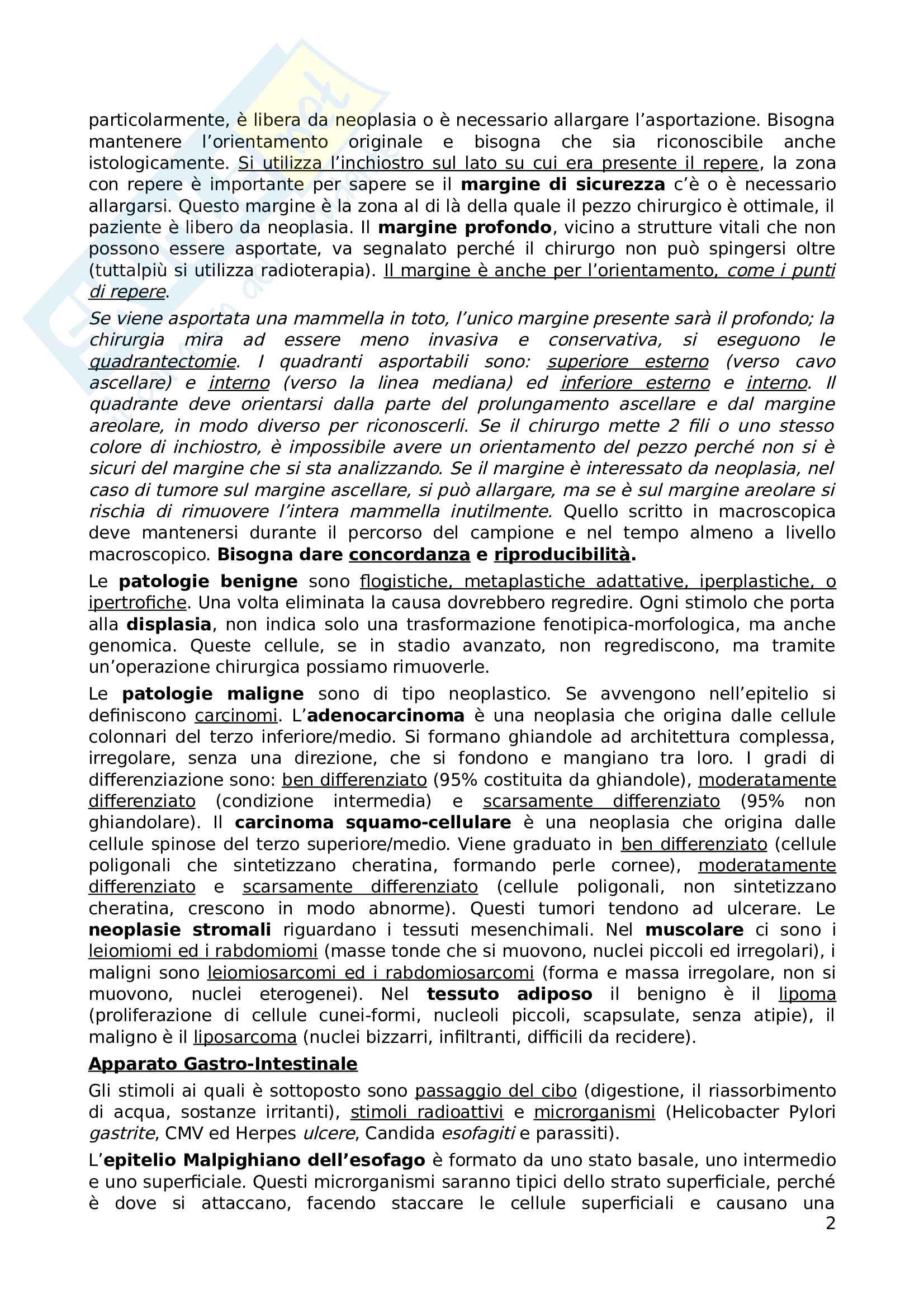 Appunti di Anatomia Patologica Pag. 2