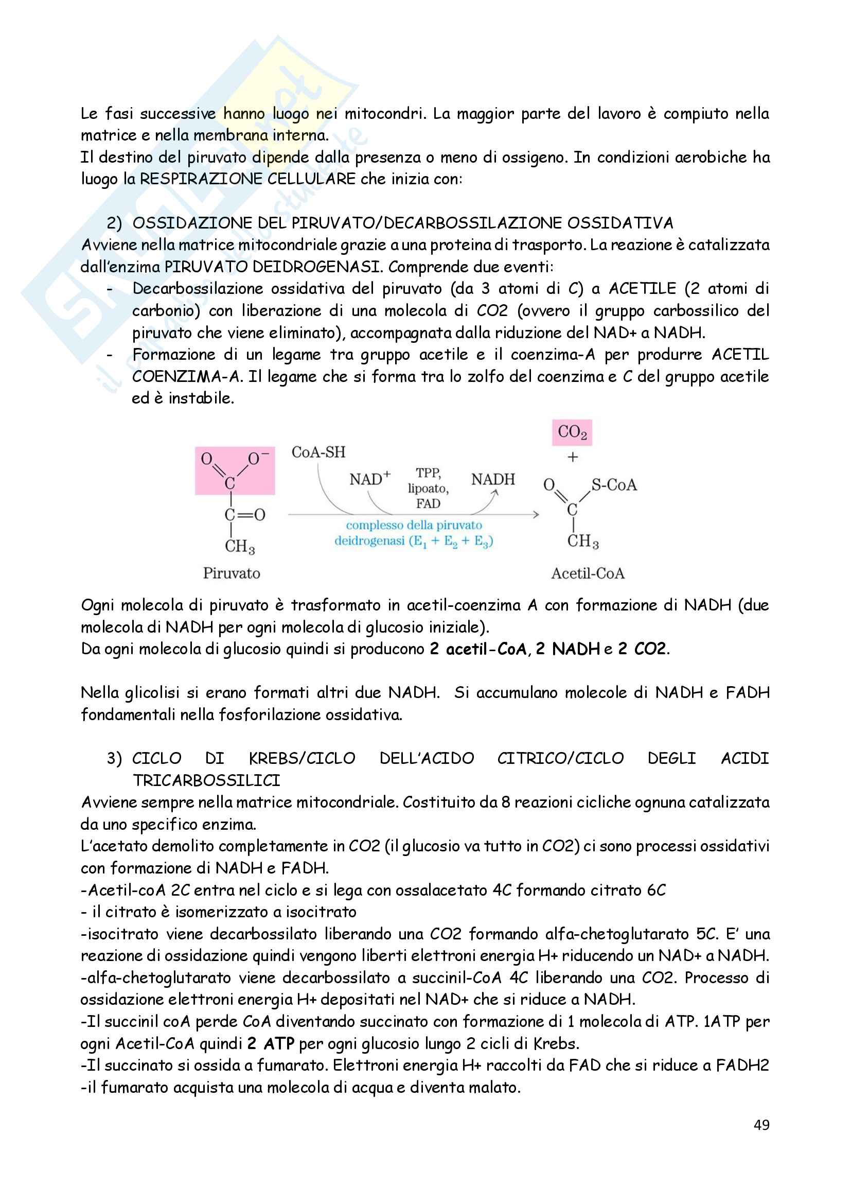 Biologia animale 2 Pag. 21