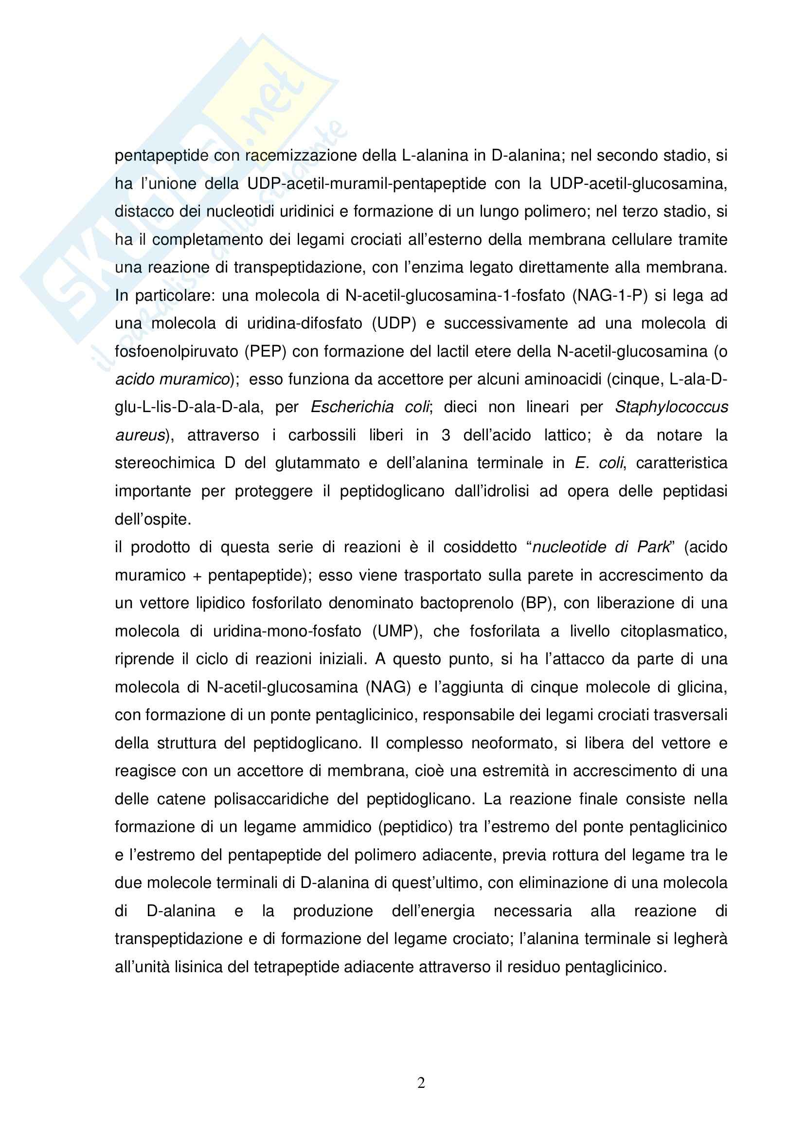 Chimica farmaceutica - le penicilline Pag. 2