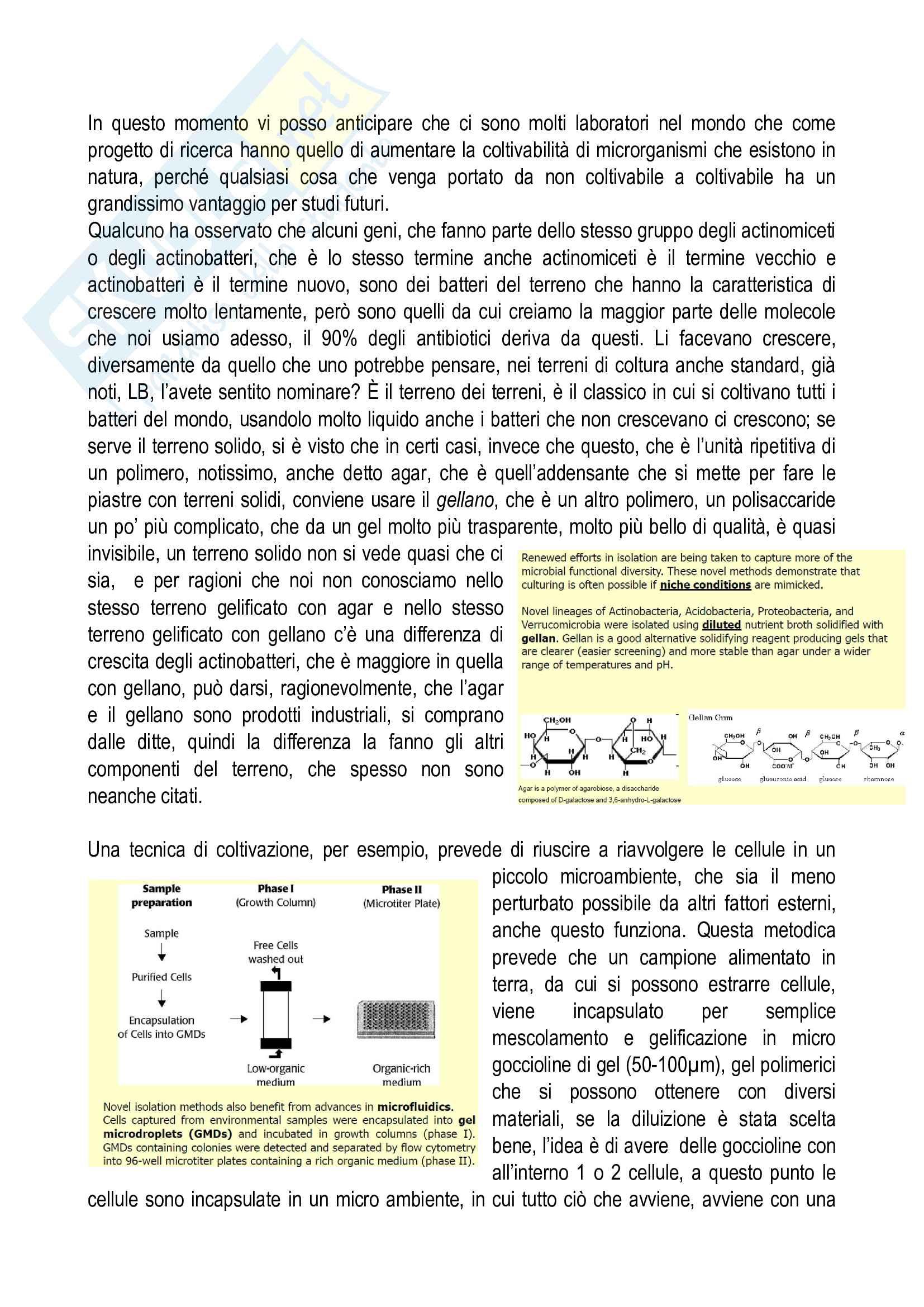 Appunti Biotecnologie microbiche industriali e ambientali - Modulo 1 Pag. 6
