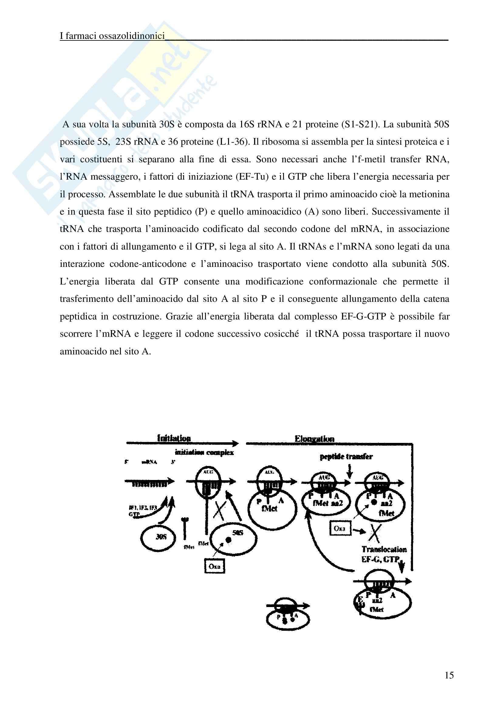 Chimica farmaceutica - ossazolidinonici Pag. 16