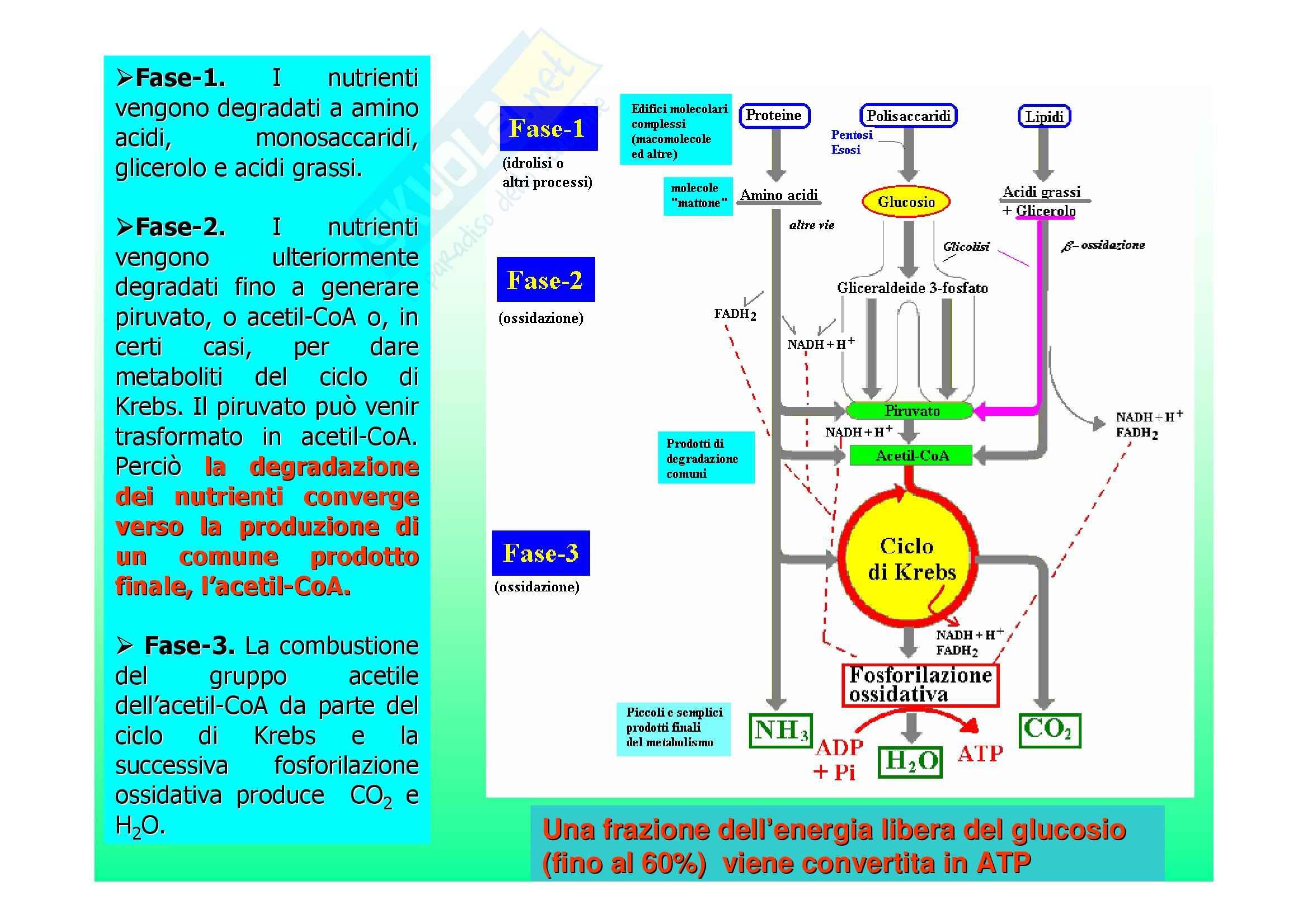 Biochimica II – Lezione 5 – Slides