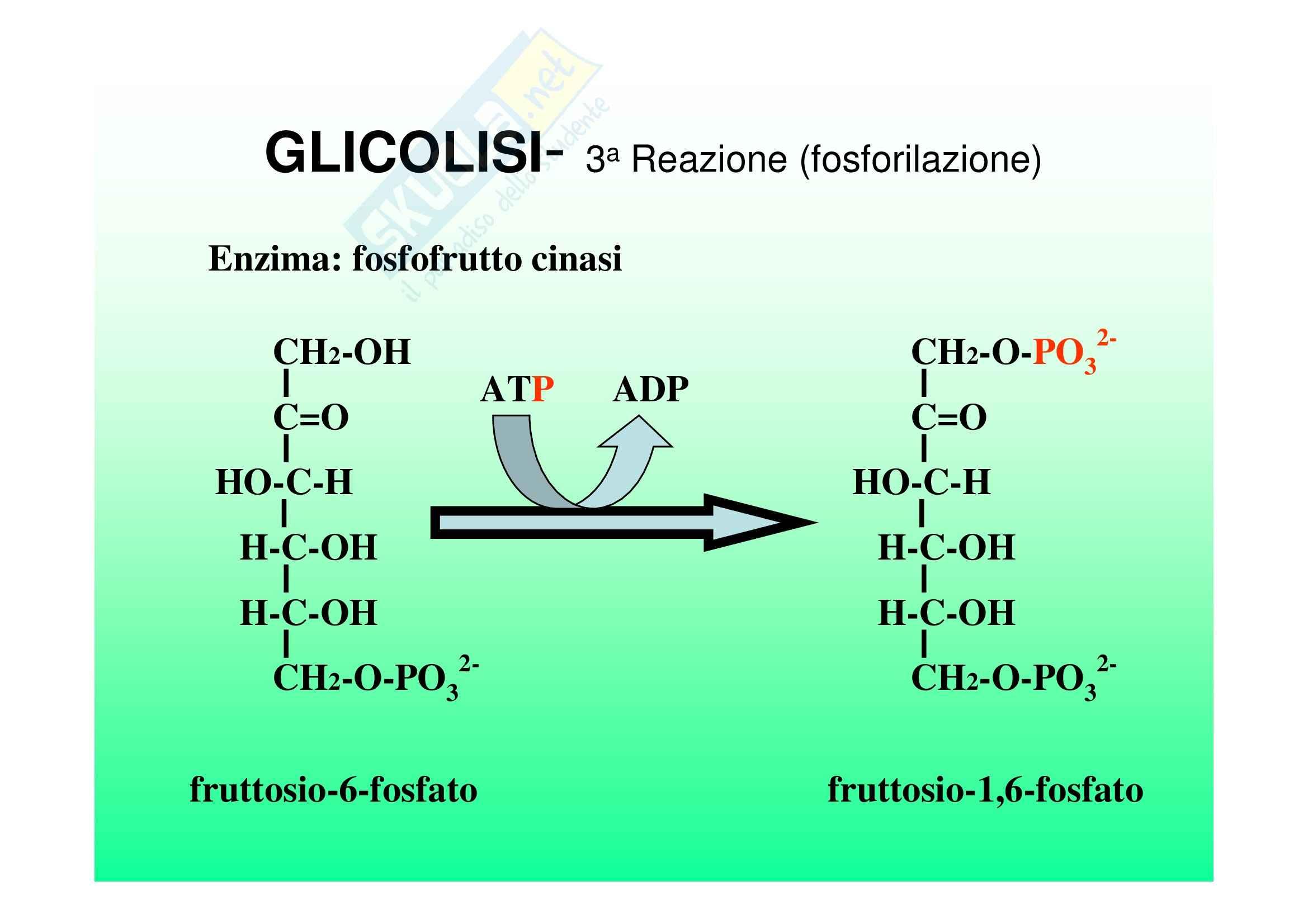 Biochimica II – Lezione 5 – Slides Pag. 6
