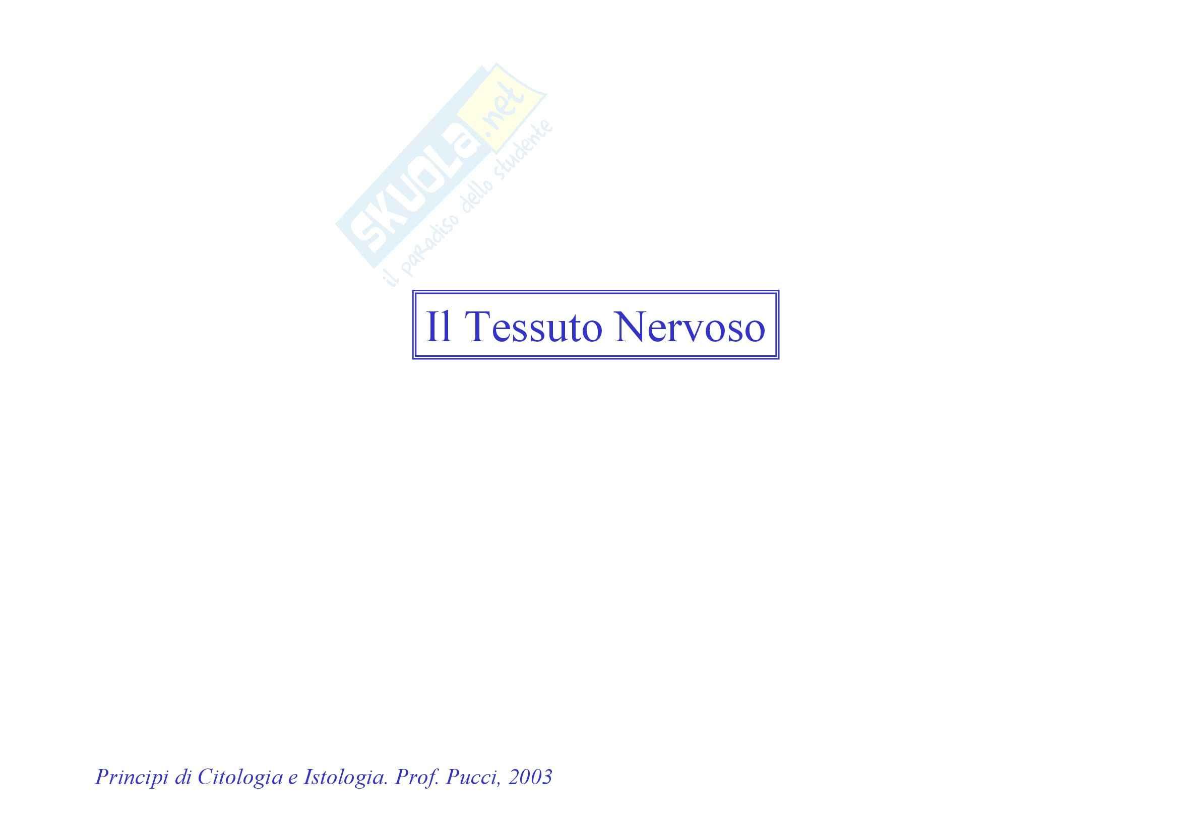 Istologia - Tessuto nervoso