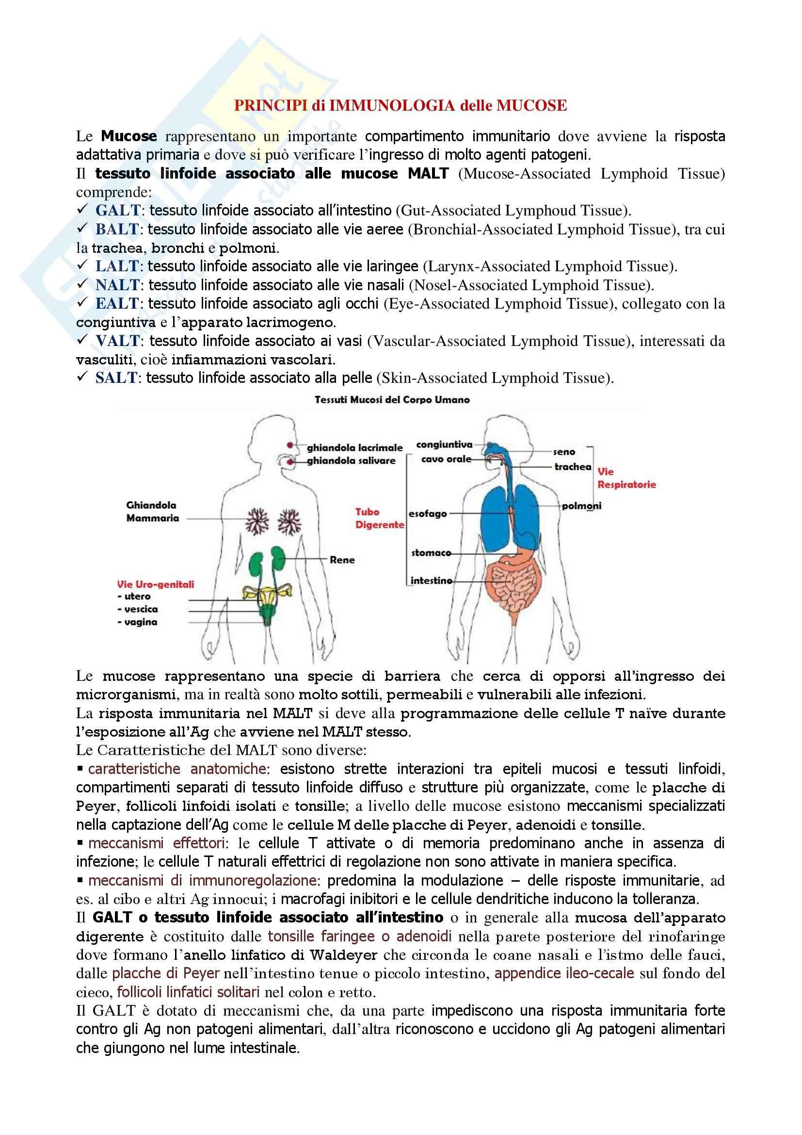 Immunologia - principi di immunologia delle mucose