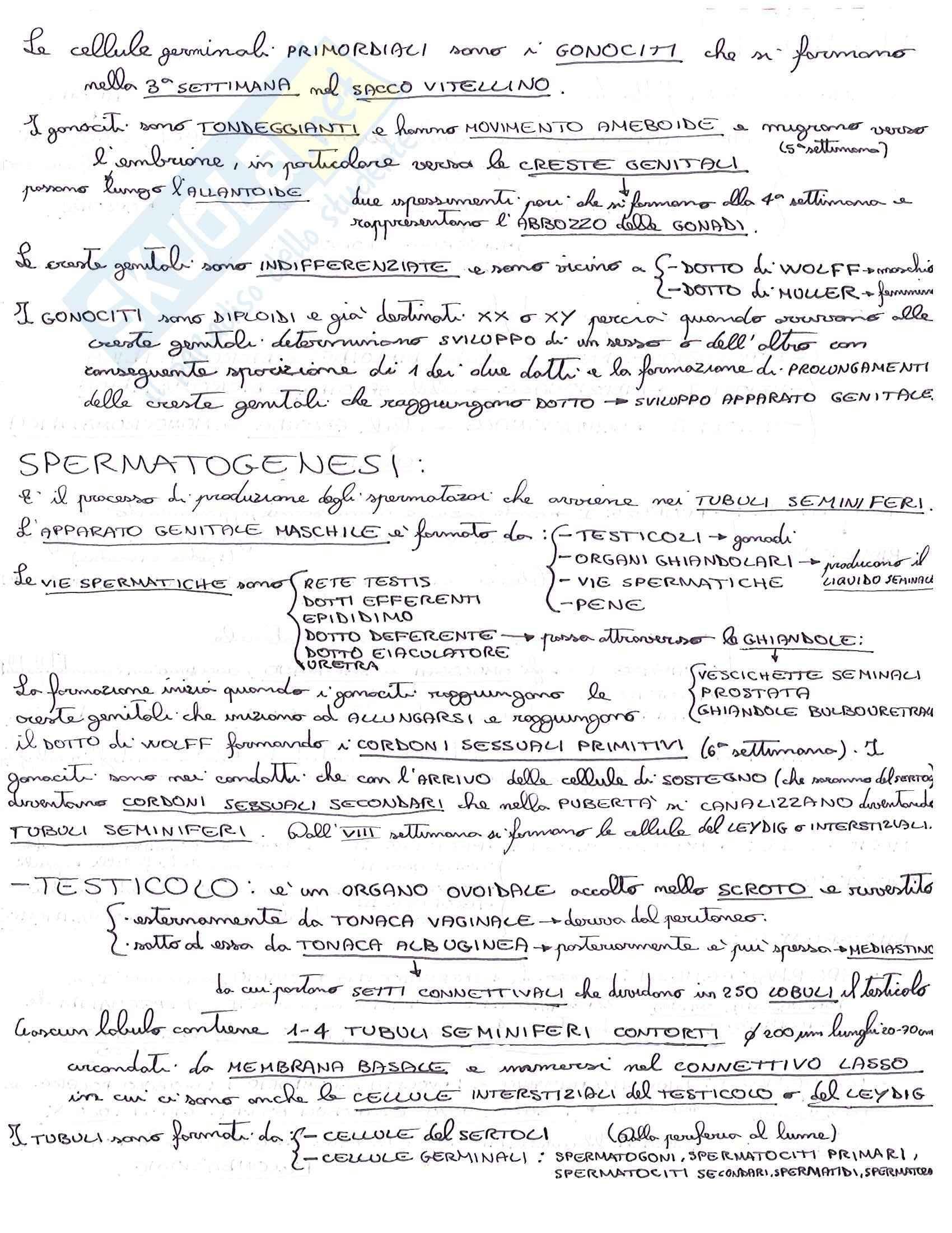 Embriologia, Istologia e embriologia umana Pag. 2