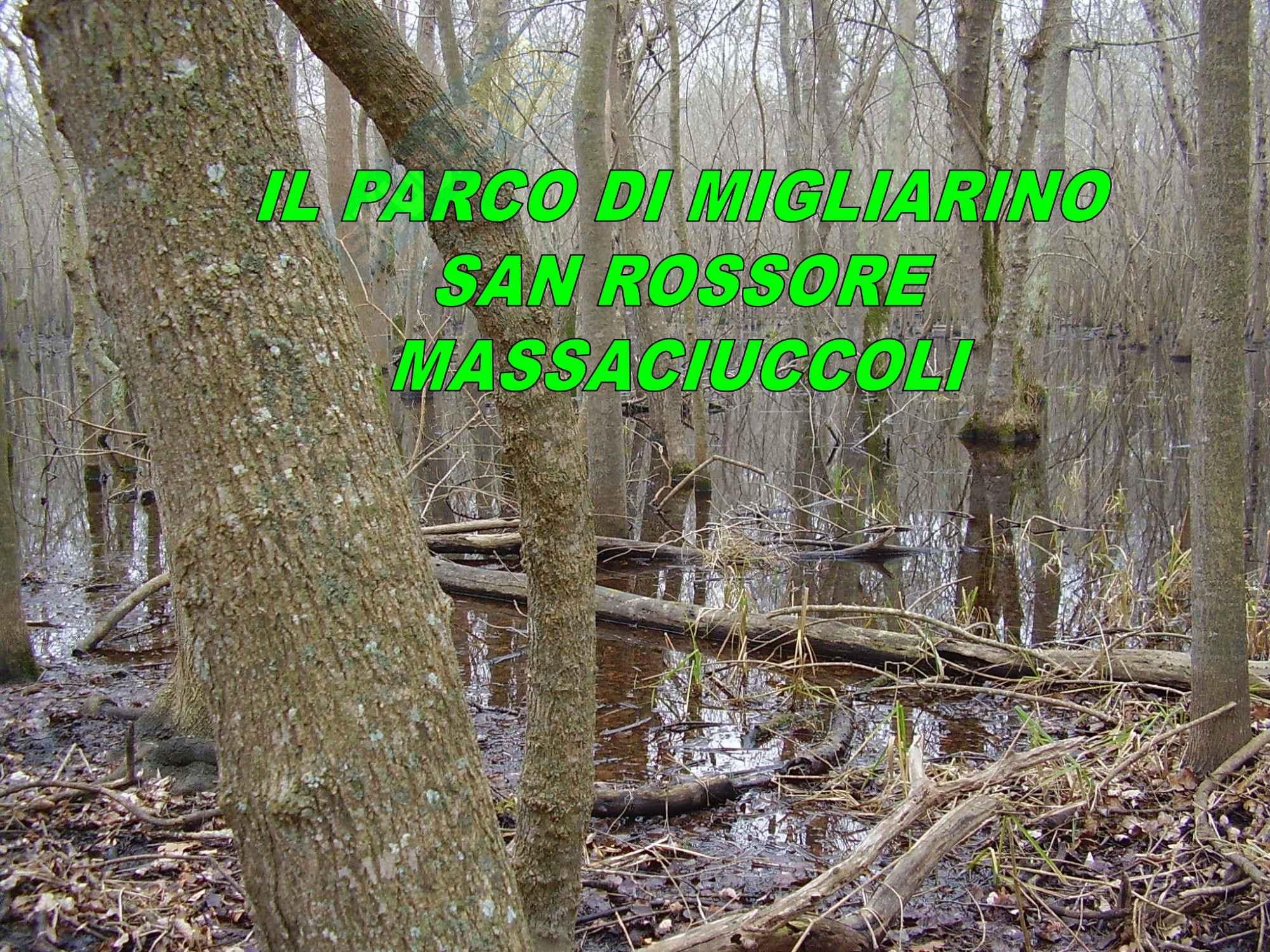 Ecologia - flora e fauna del Parco di San Rossore