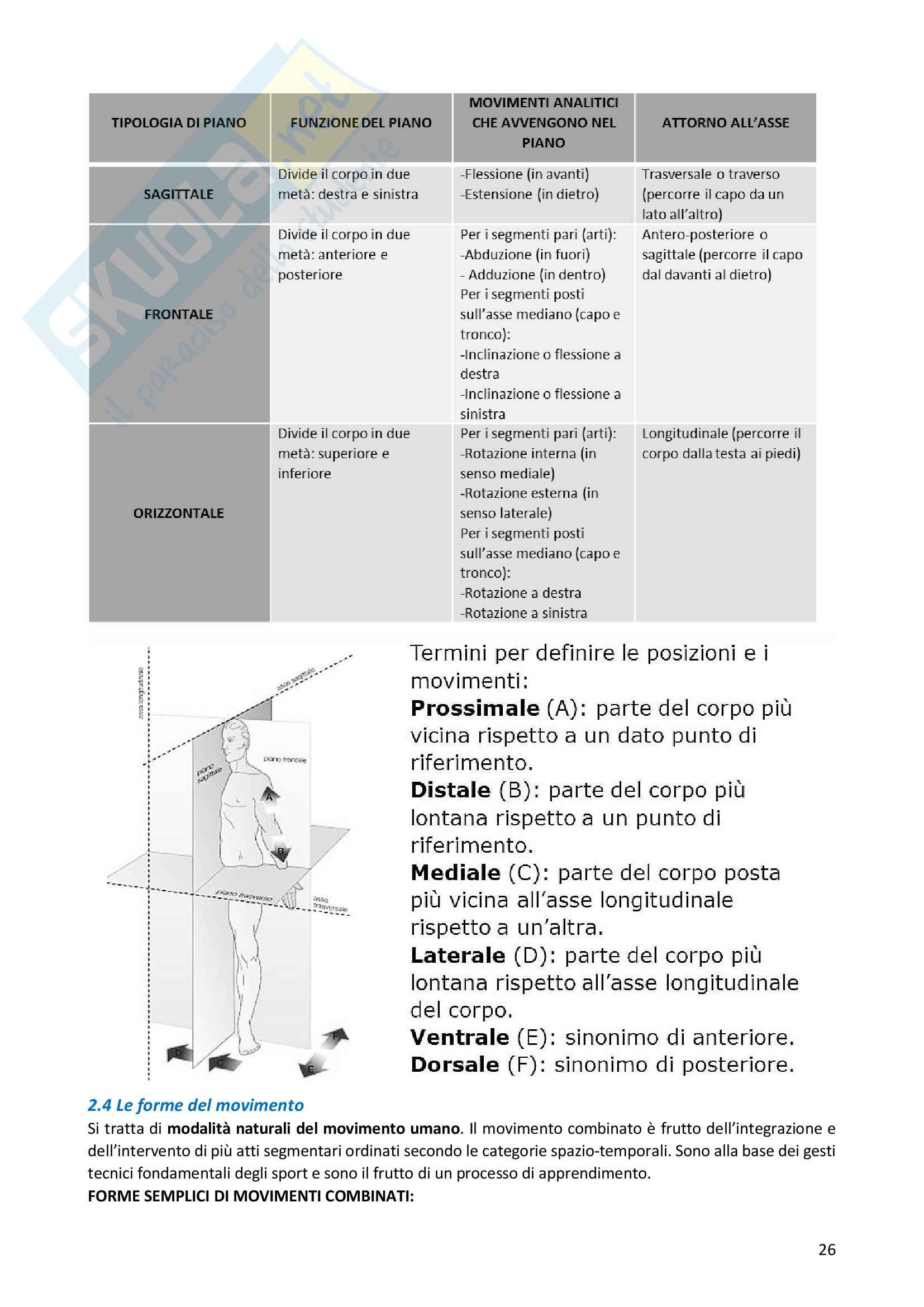 Riassunto esame Scienze Motorie, docente F. D'elia, libro consigliato Didattica delle attività motorie per l'età evolutiva, Francesco Casolo Pag. 26