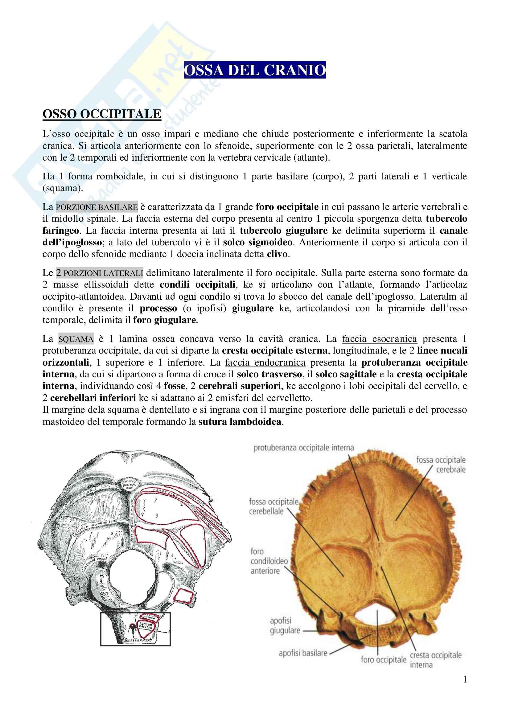 Ossa del cranio, Anatomia dell'apparato stomatognatico