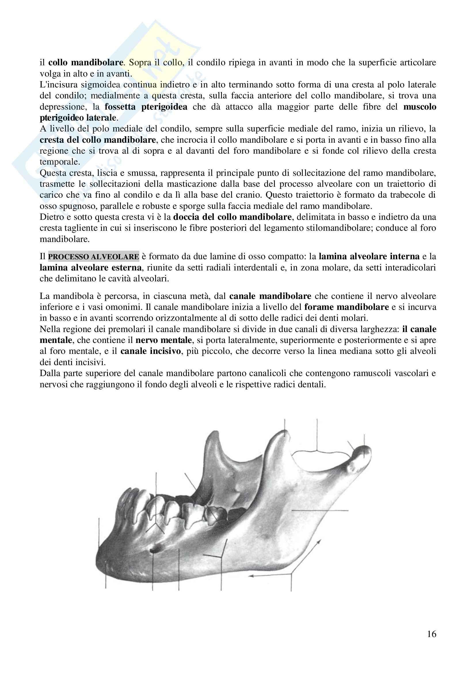 Ossa del cranio, Anatomia dell'apparato stomatognatico Pag. 16