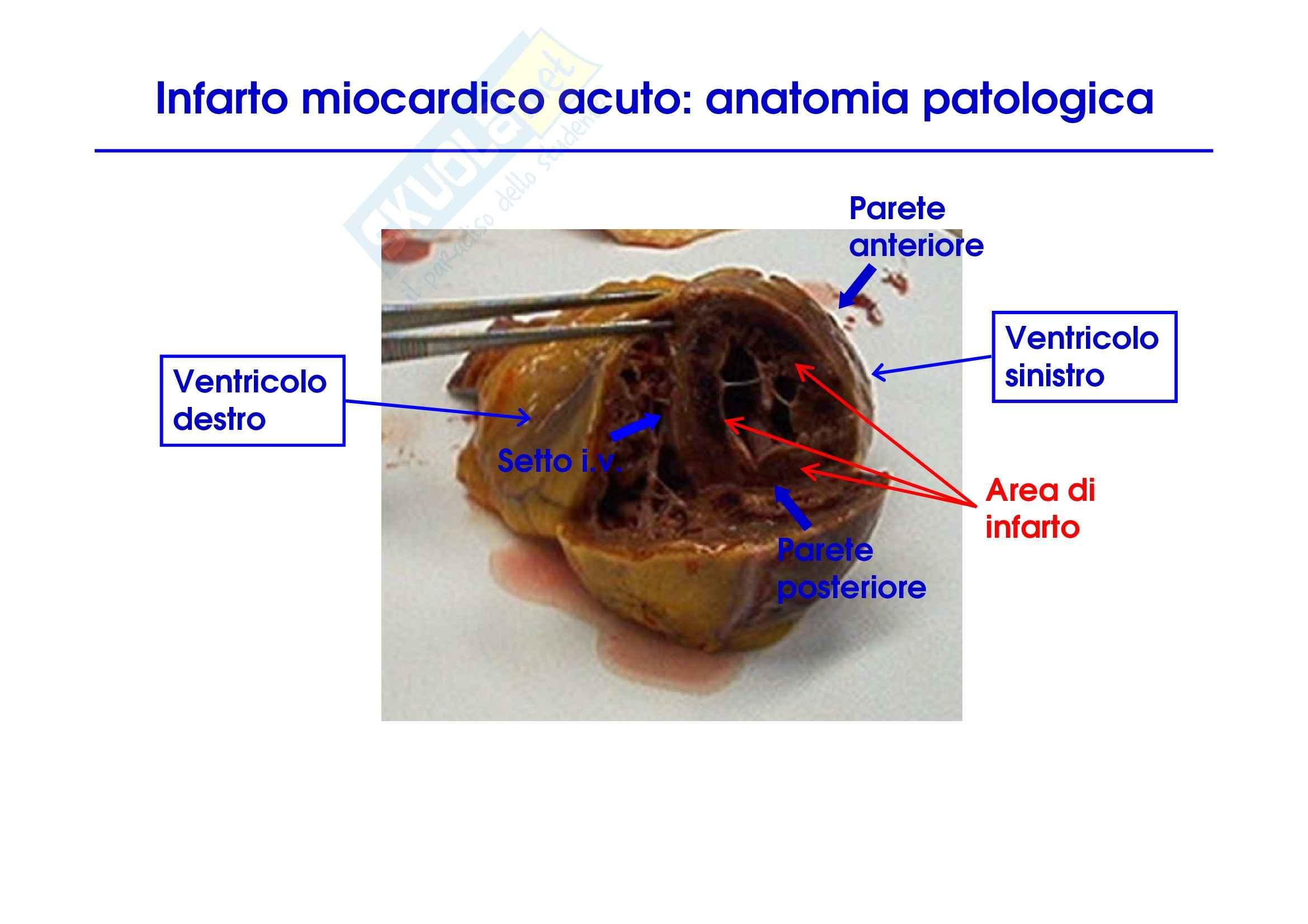 Medicina Interna del cuore Pag. 51