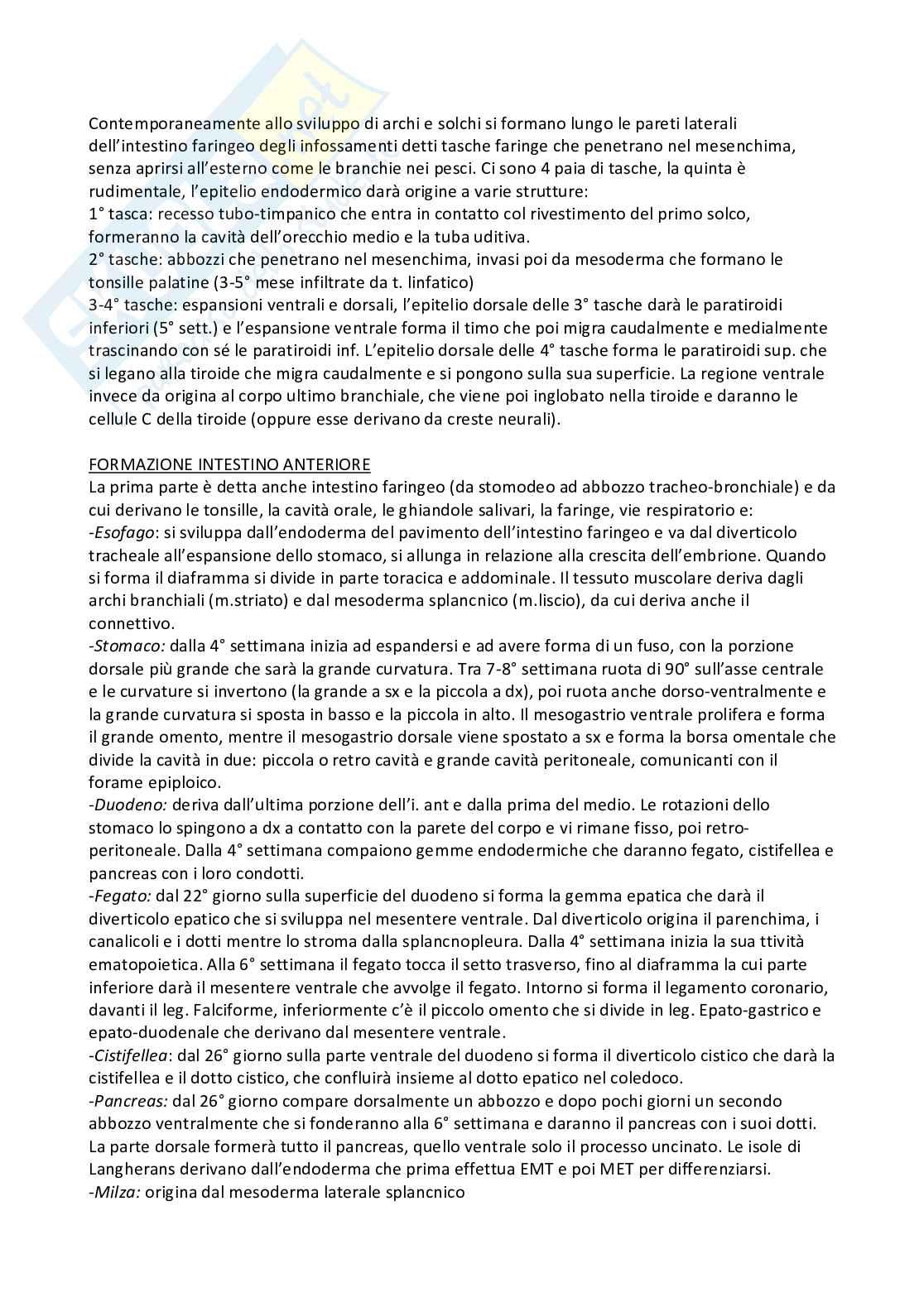 Riassunto embriologia, prof. De Felici, libro consigliato Embriologia Umana, De Felici et al, Piccin Pag. 31
