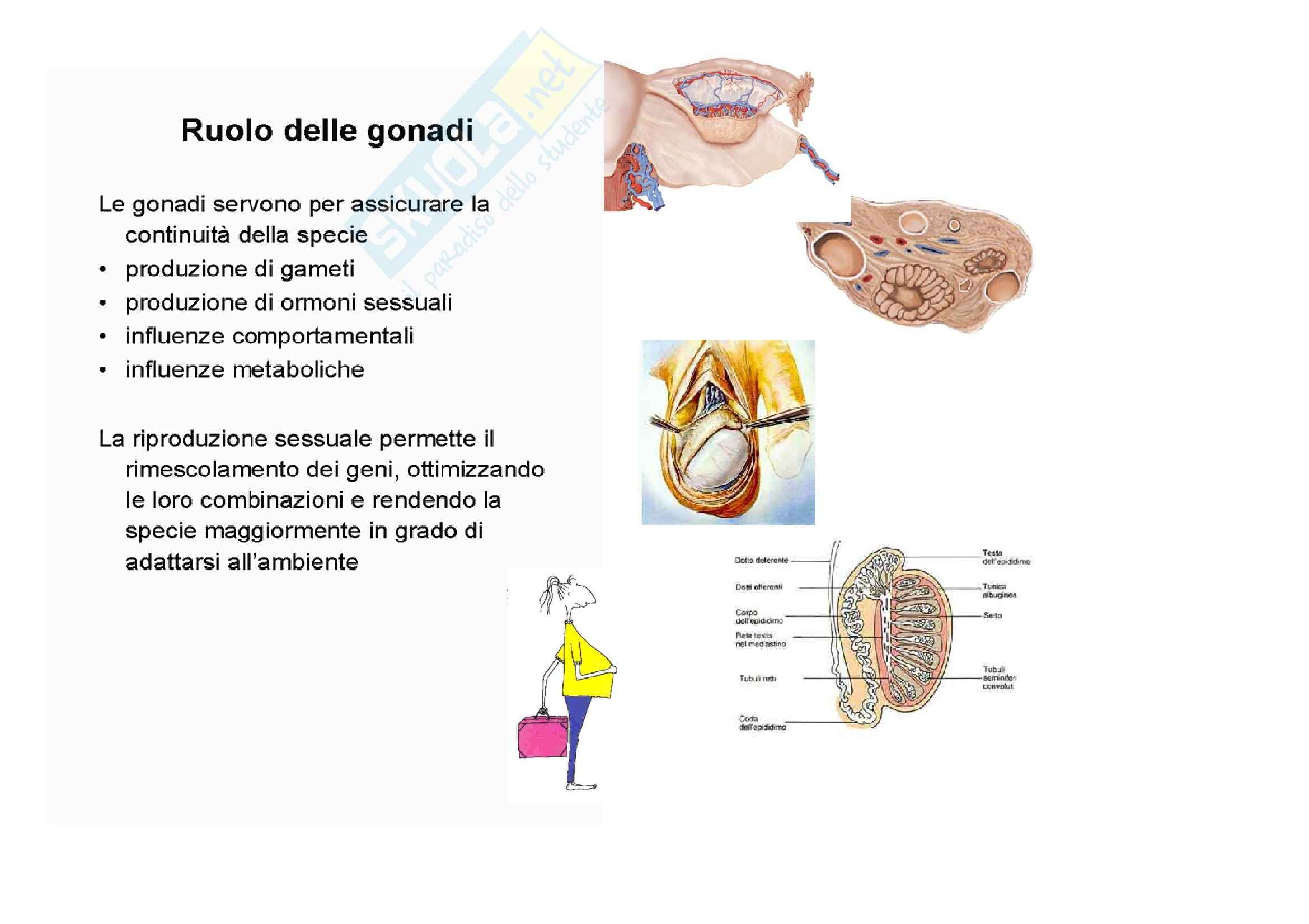 Ginecologia e ostetricia - Gonadi