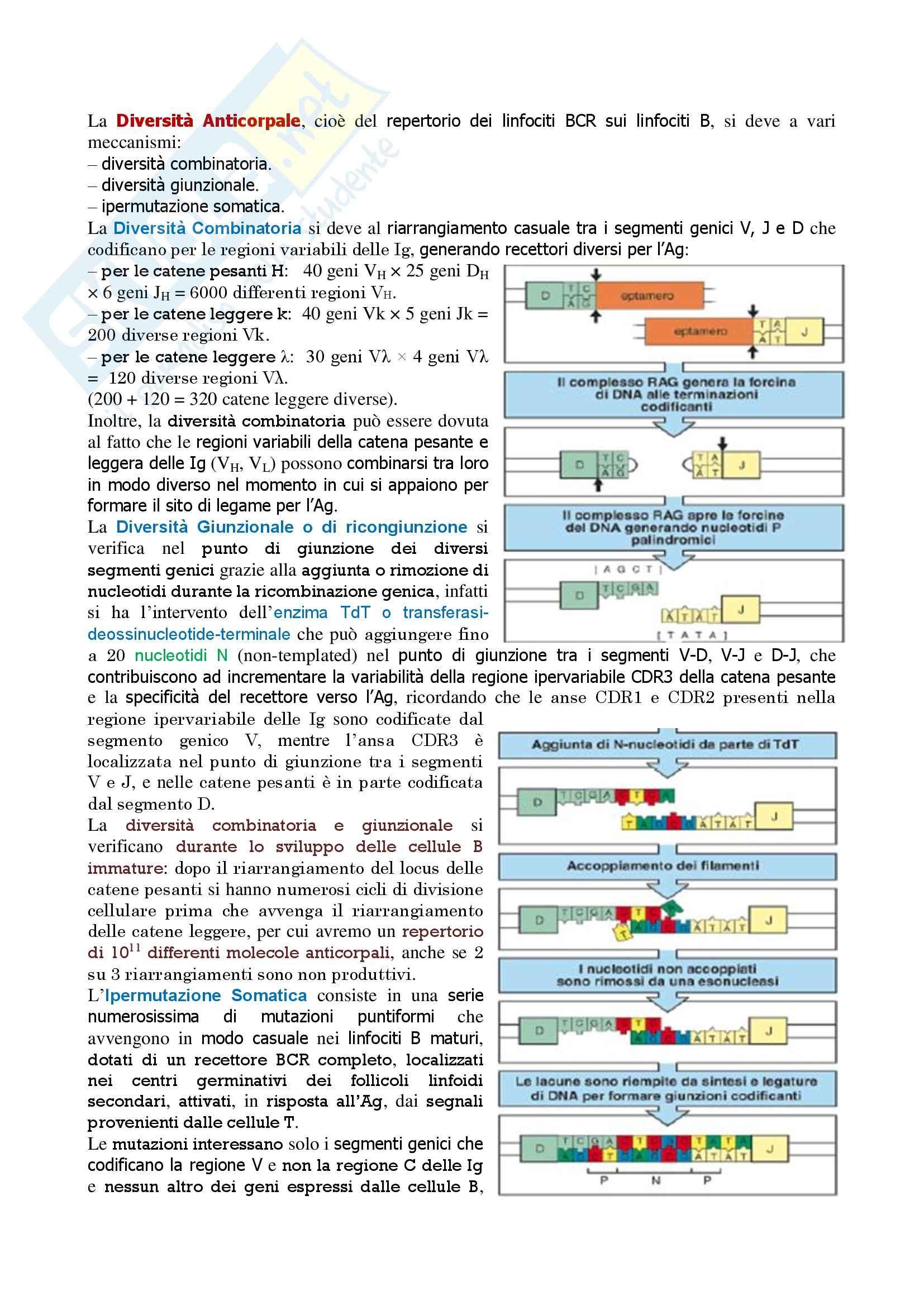 Immunologia – diversità anticorpale