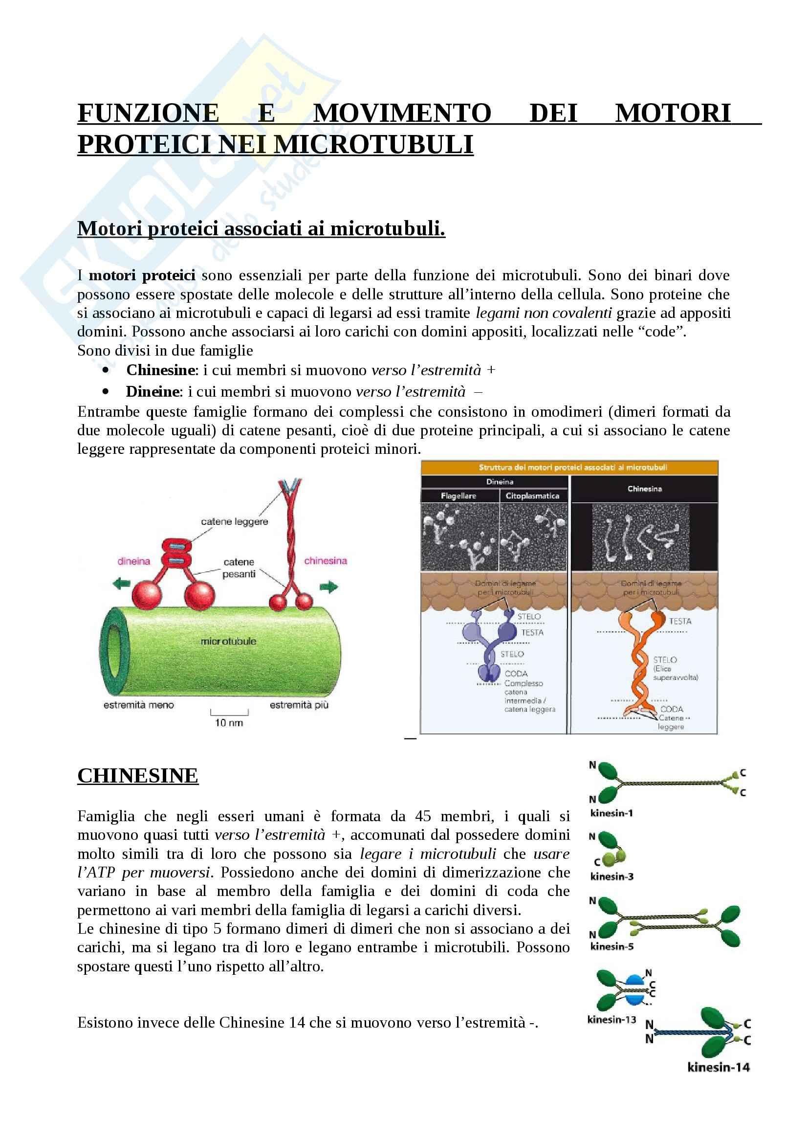 Citologia - motori proteici dei microtubuli