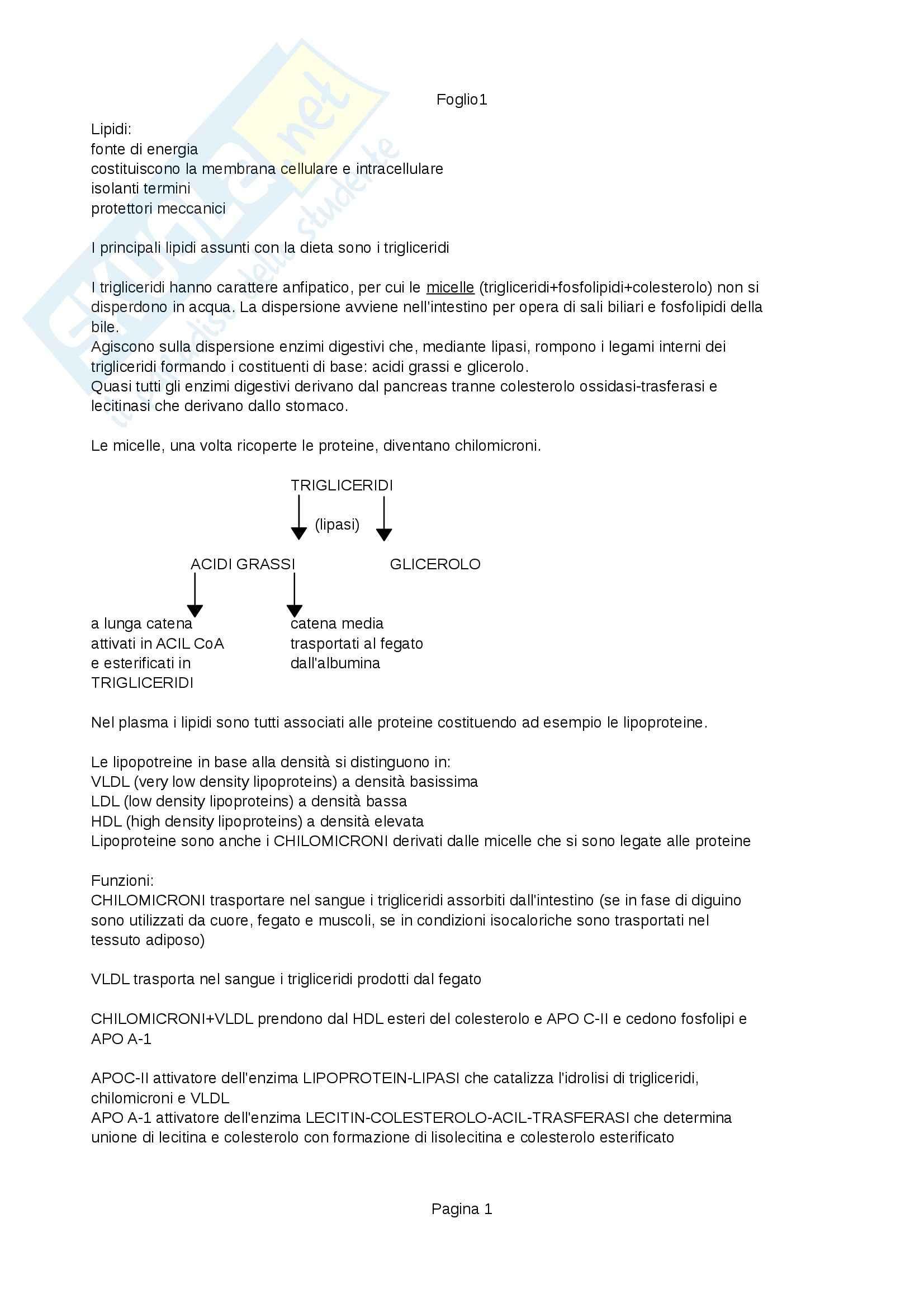 Riassunto esame Biochimica, prof. Visai, libro consigliato Manuale di Chimica-biochimica Medica e Chimica Clinica di Caldera e Burti