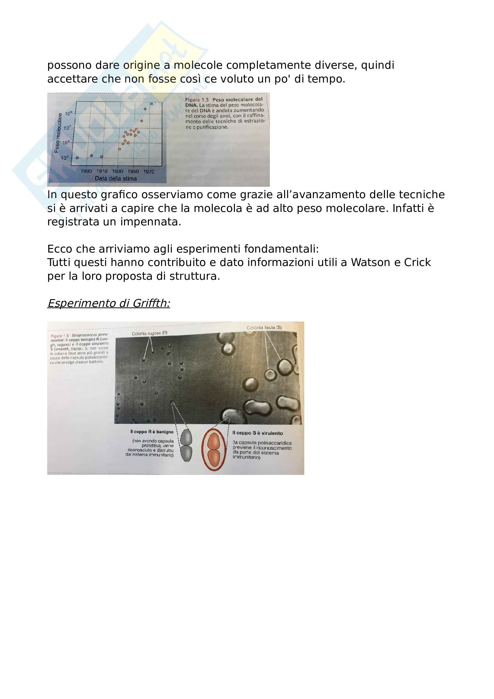 Struttura Dna - Biologia Molecolare Pag. 2