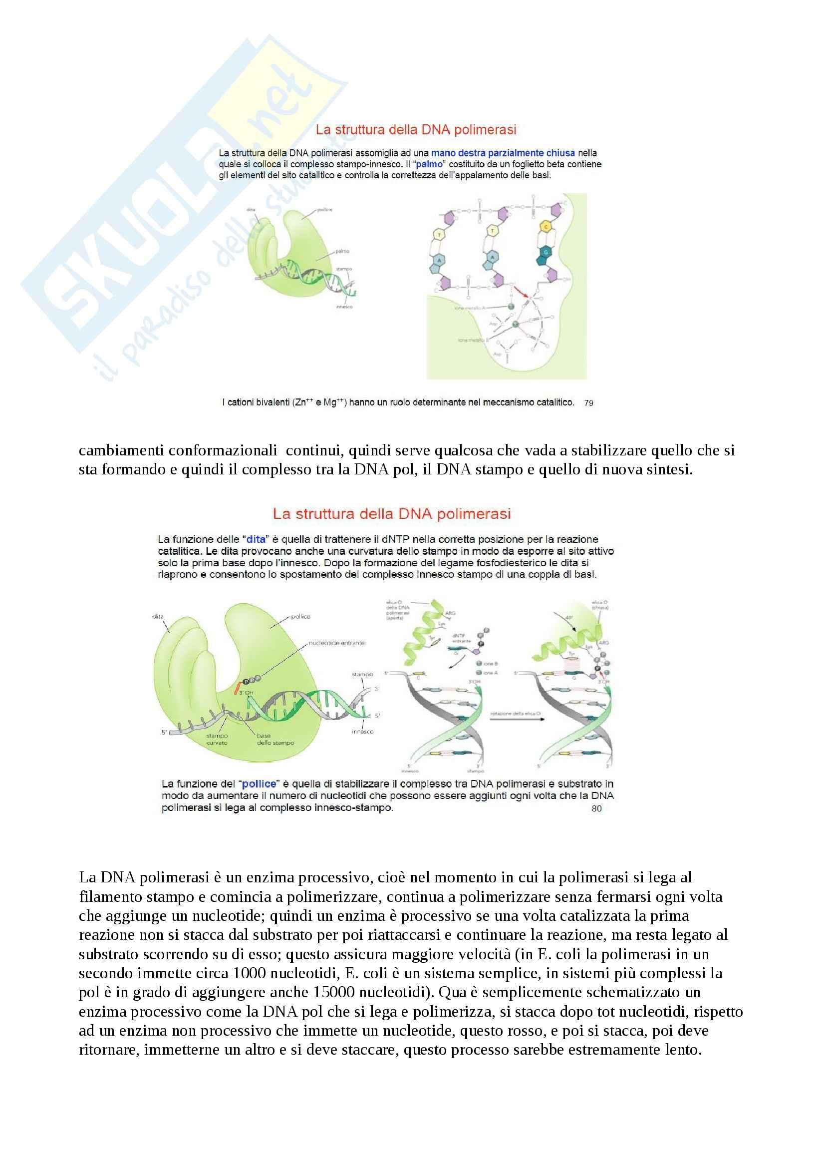 Biochimica - Appunti Pag. 26