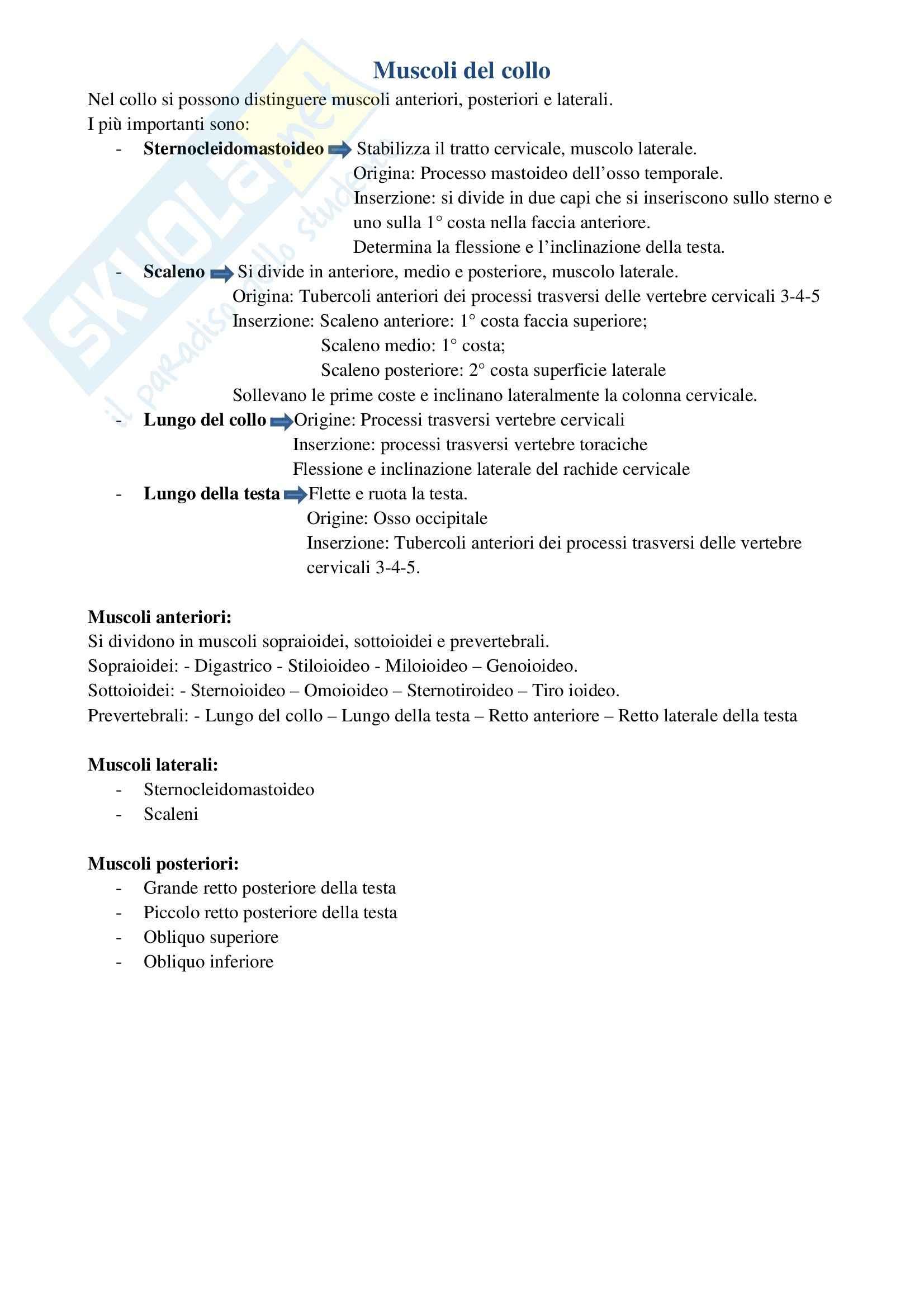 Riassunto esame Anatomia umana, prof. Ripani, libro consigliato Anatomia clinica, Marinozzi