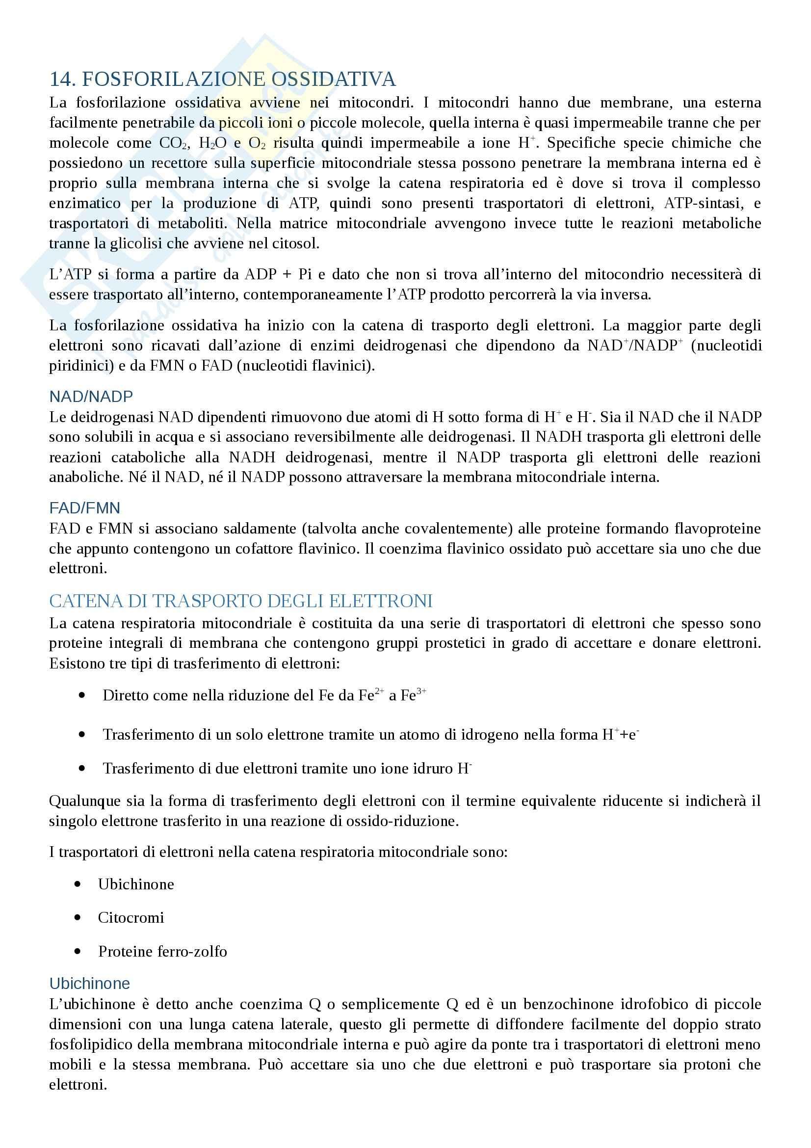 Biochimica - fosforilazione ossidativa