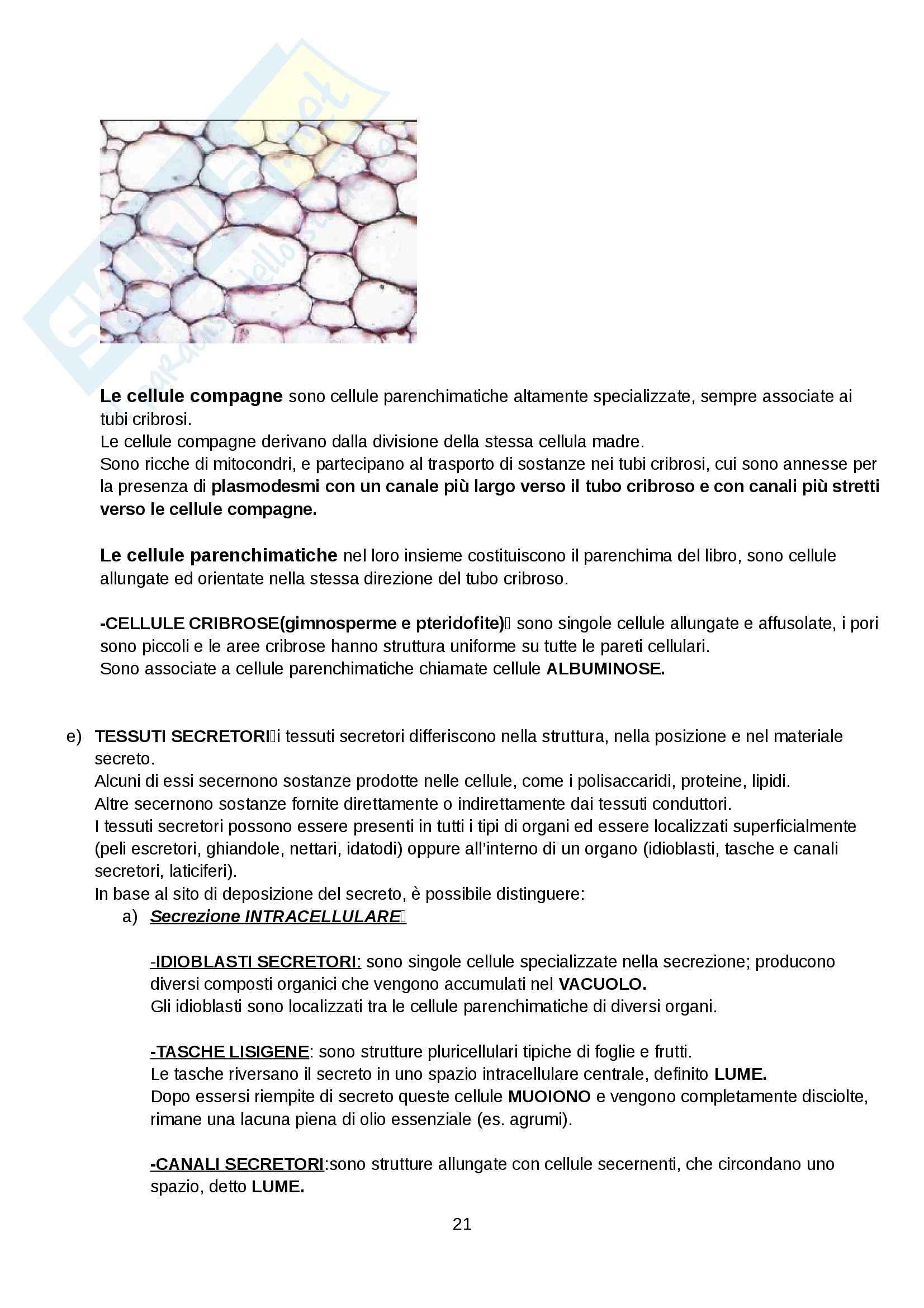 Botanica - Appunti Pag. 21