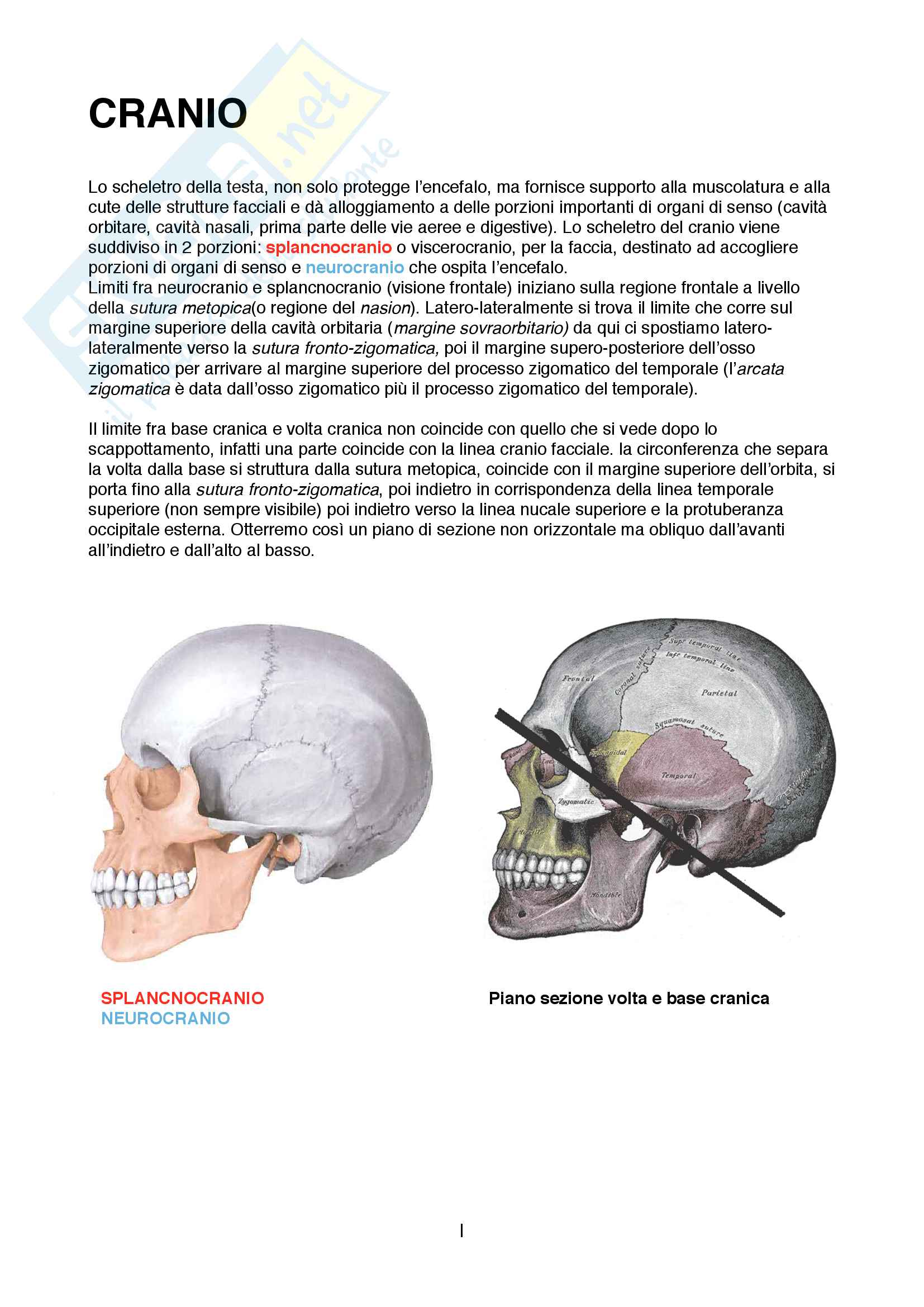 Descrizione generale dell'anatomia del cranio