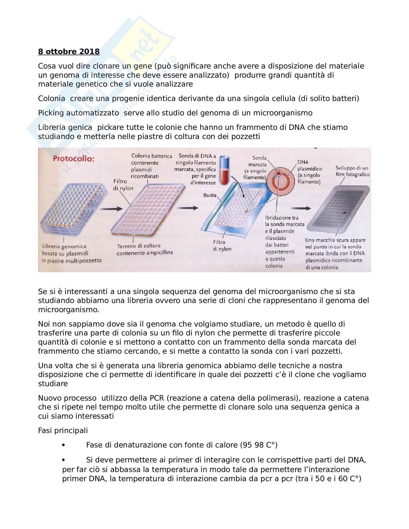 clonaggio e PCR tecnologie ricombinanti