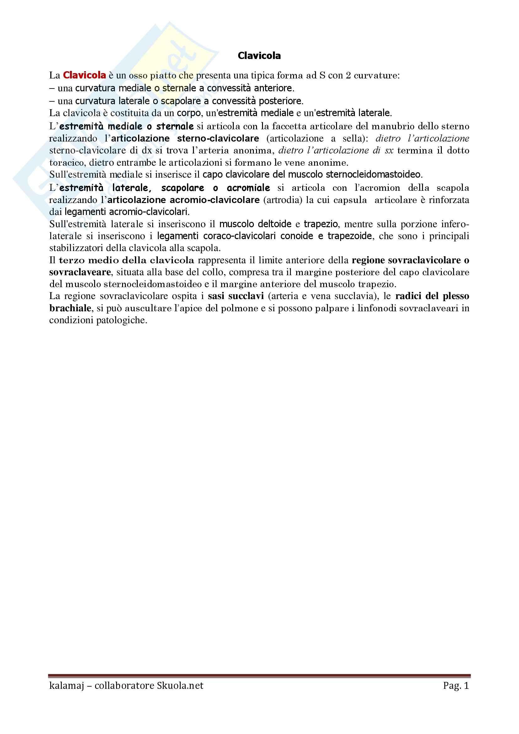 Anatomia umana - Clavicola