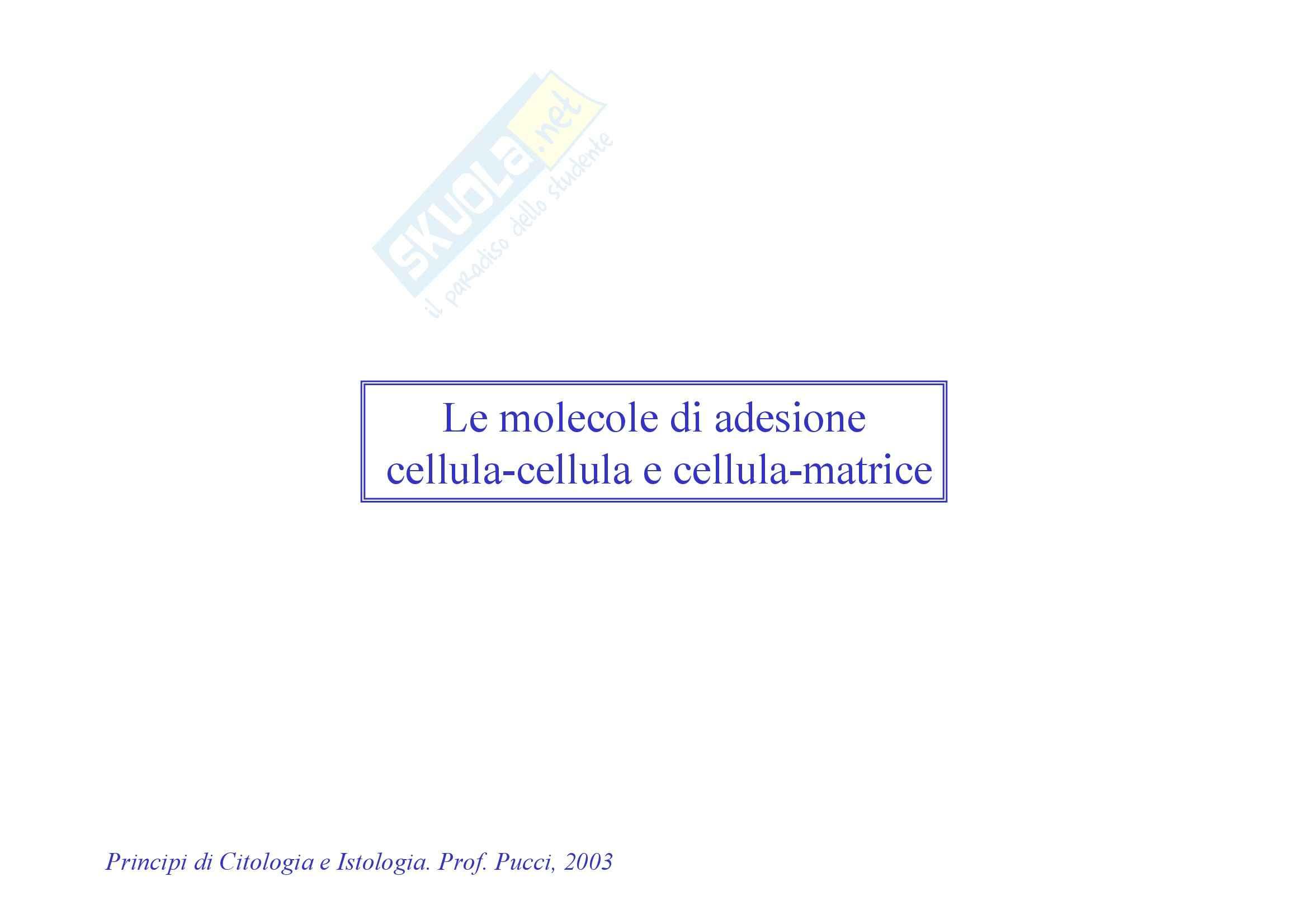 Biochimica - adesione delle molecole