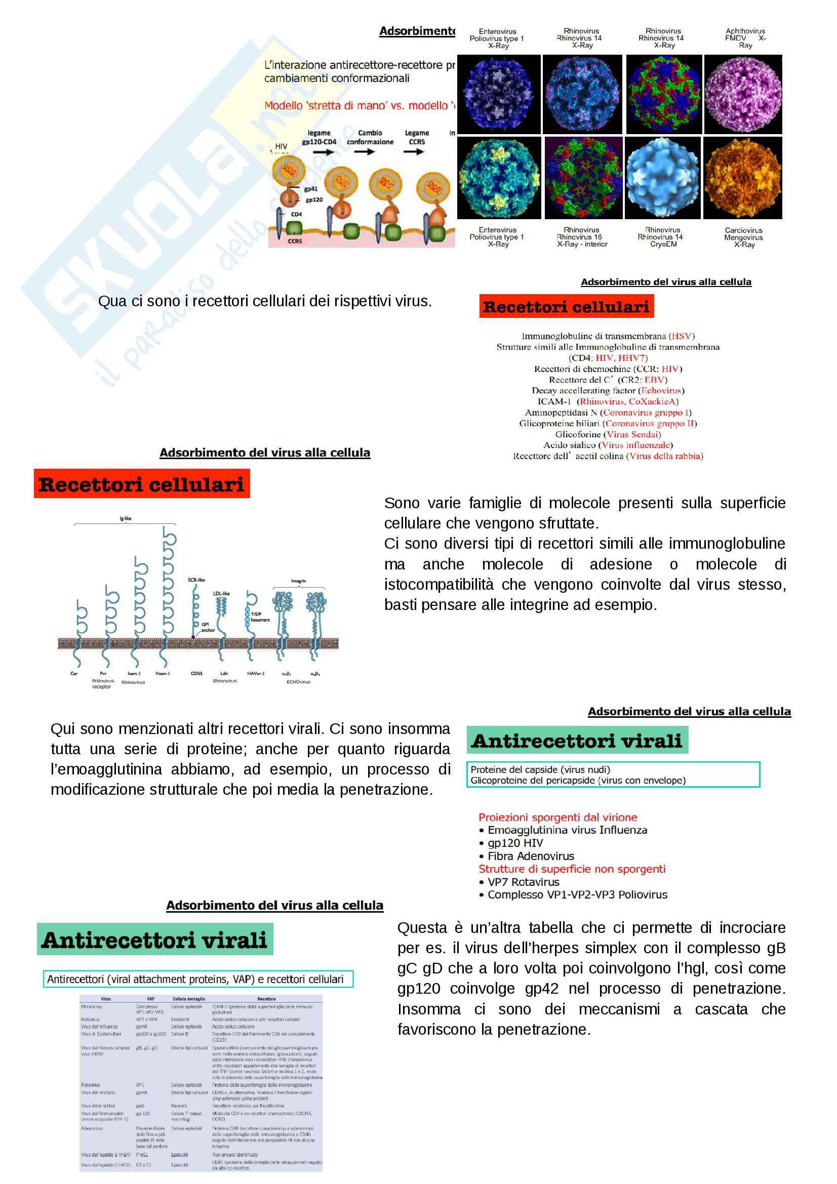 Replicazione Virale, Lezione 2 Pag. 2