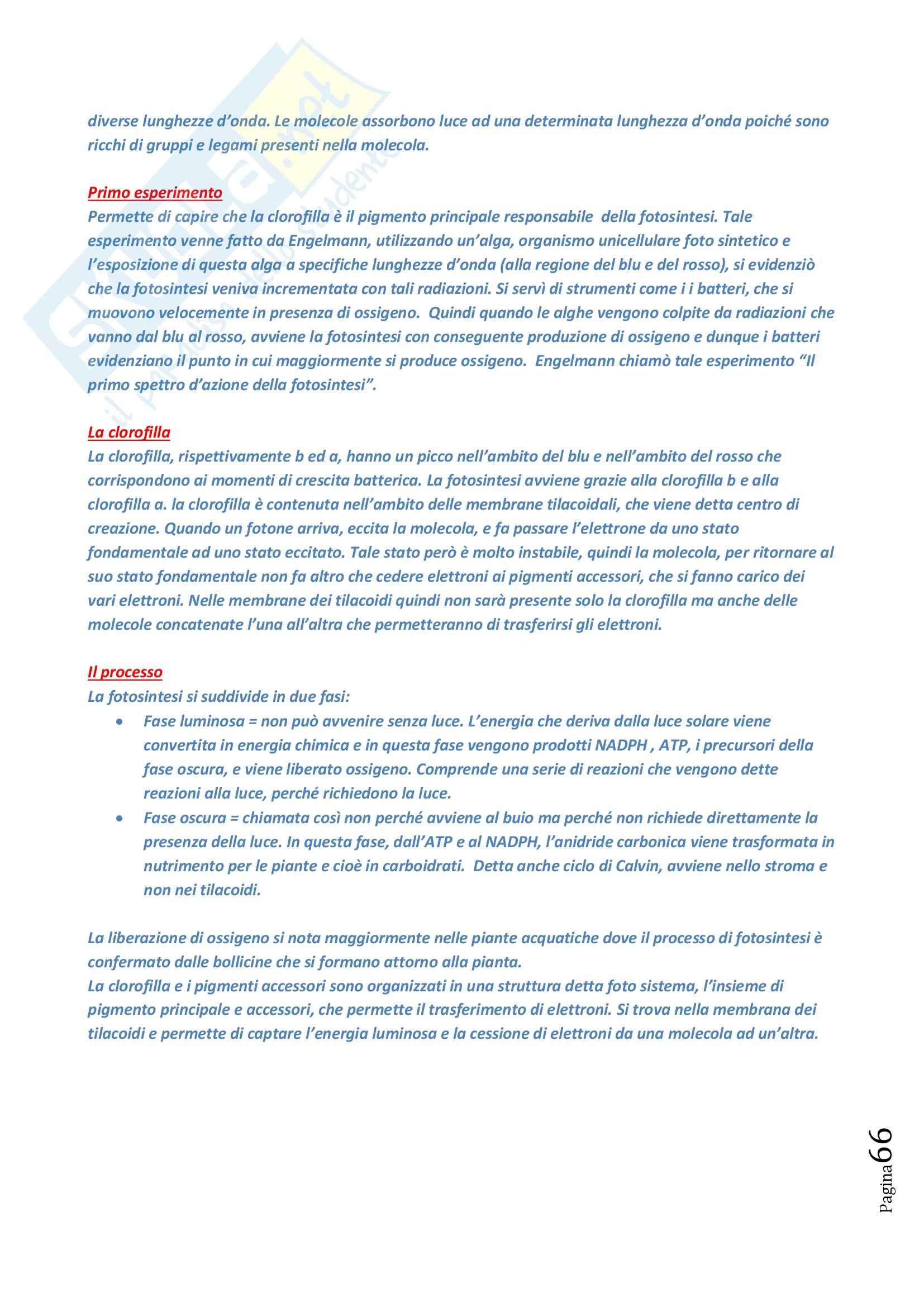 Lezioni, Biologia Animale e Vegetale Pag. 66