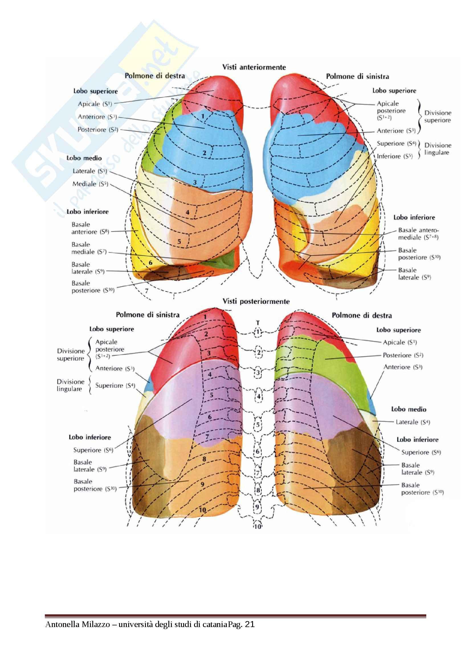 Anatomia e fisiologia dell'Apparato Respiratorio, Anatomia e fisiologia Pag. 21