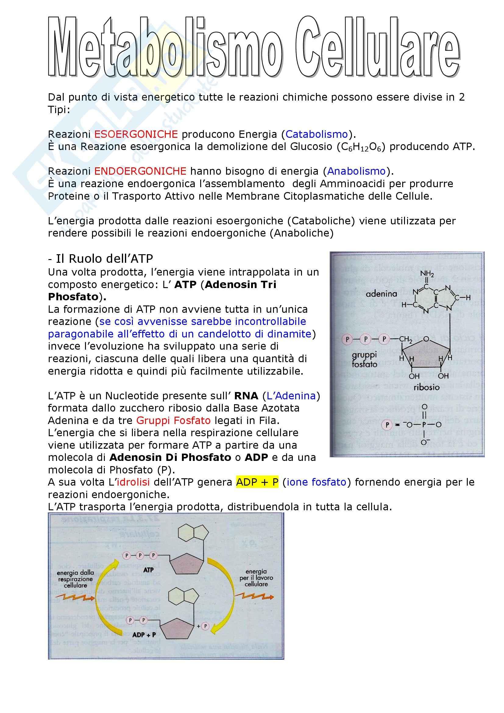 Biologia dei microrganismi - il metabolismo cellulare