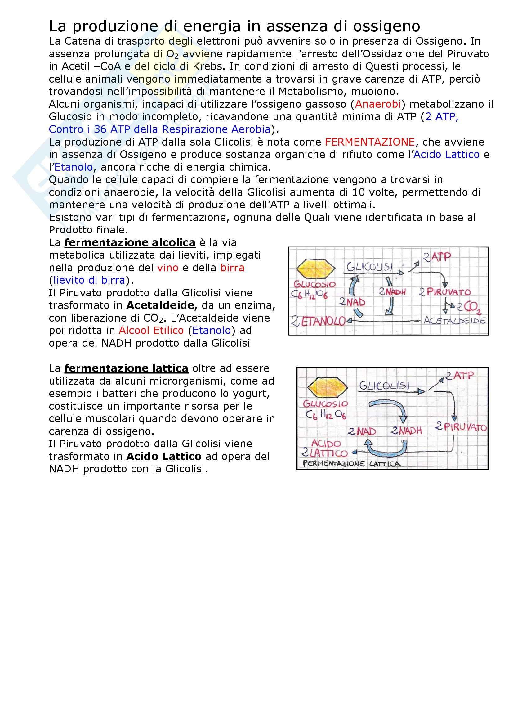 Biologia dei microrganismi - il metabolismo cellulare Pag. 11