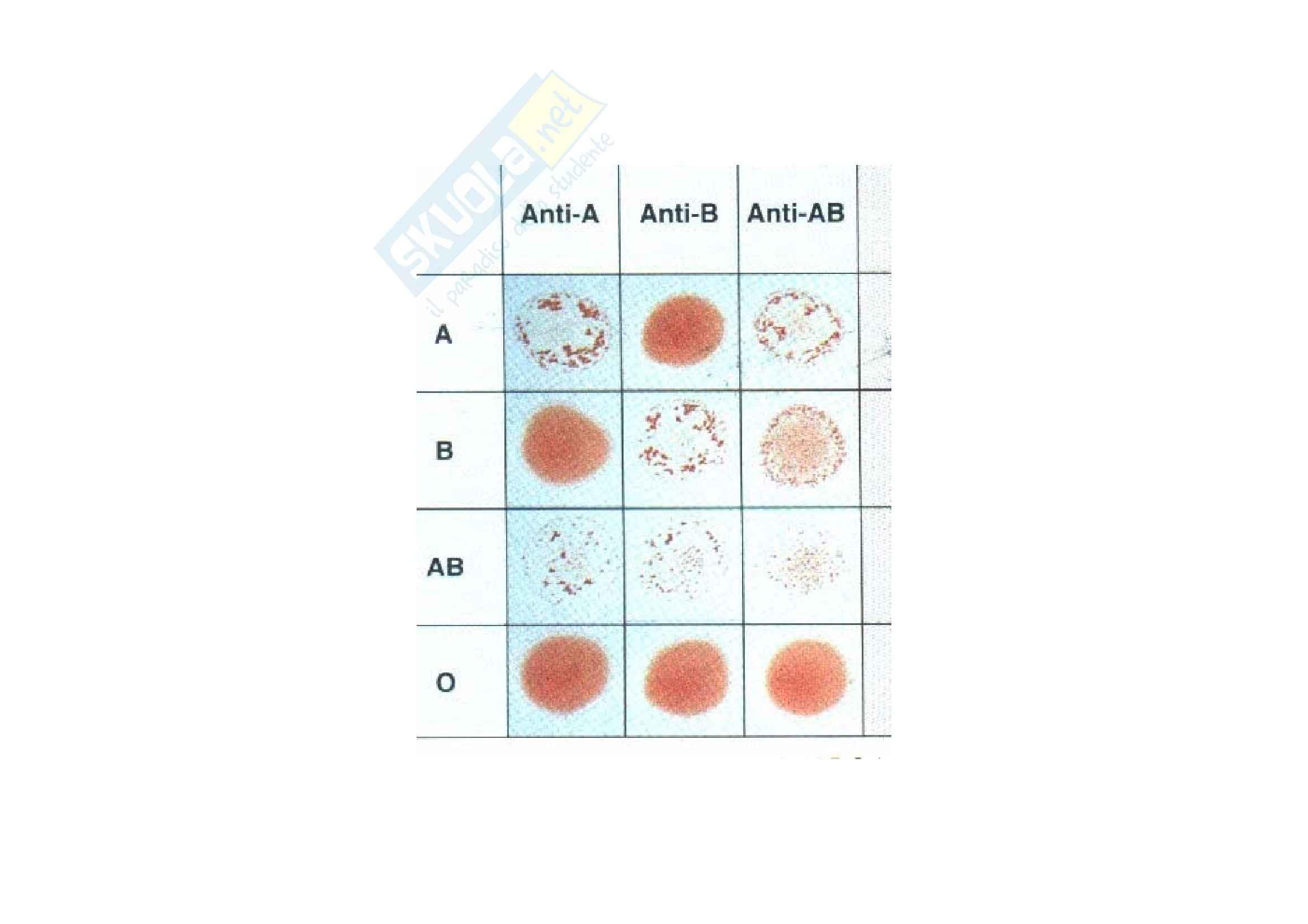 Patologia e fisiopatologia generale – Anemie Pag. 21