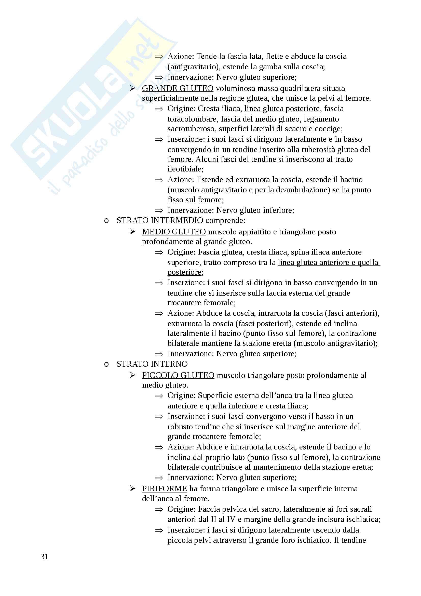 Sistema muscolare Pag. 31