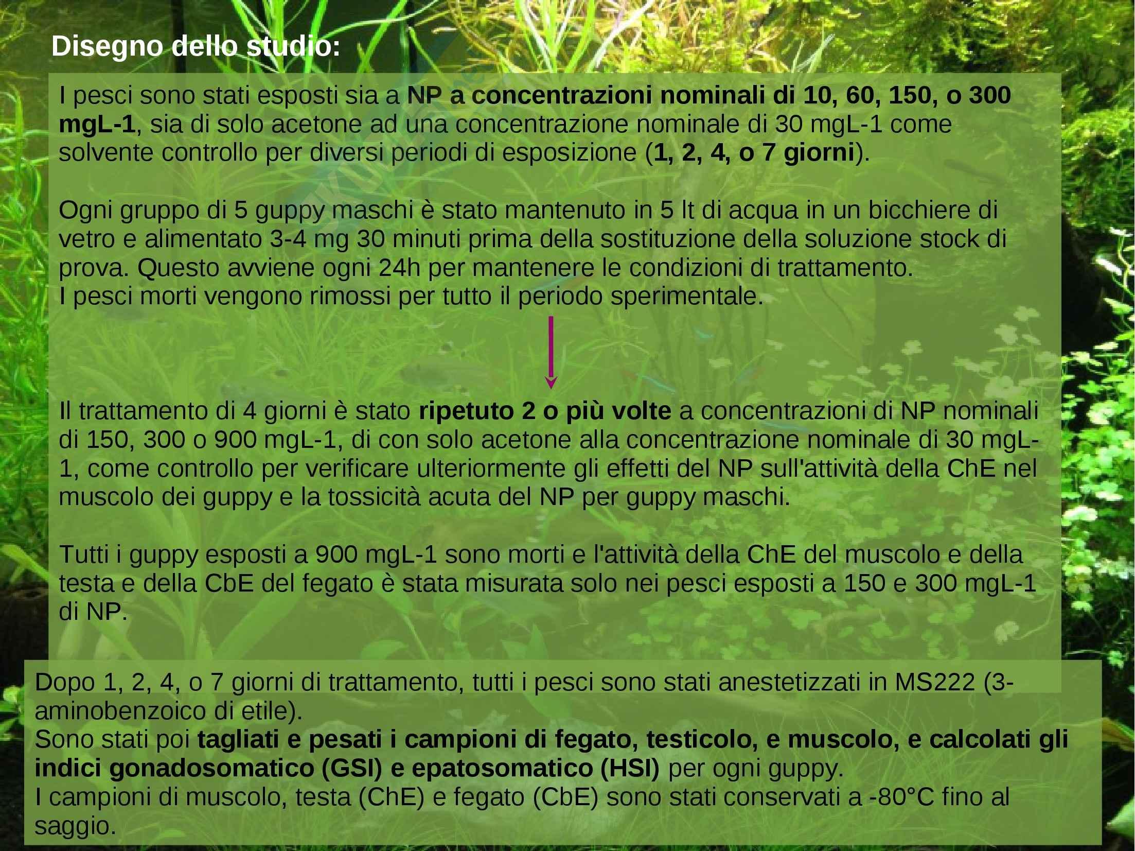 Ecotossicologia - NP Poecilia reticulata Pag. 6