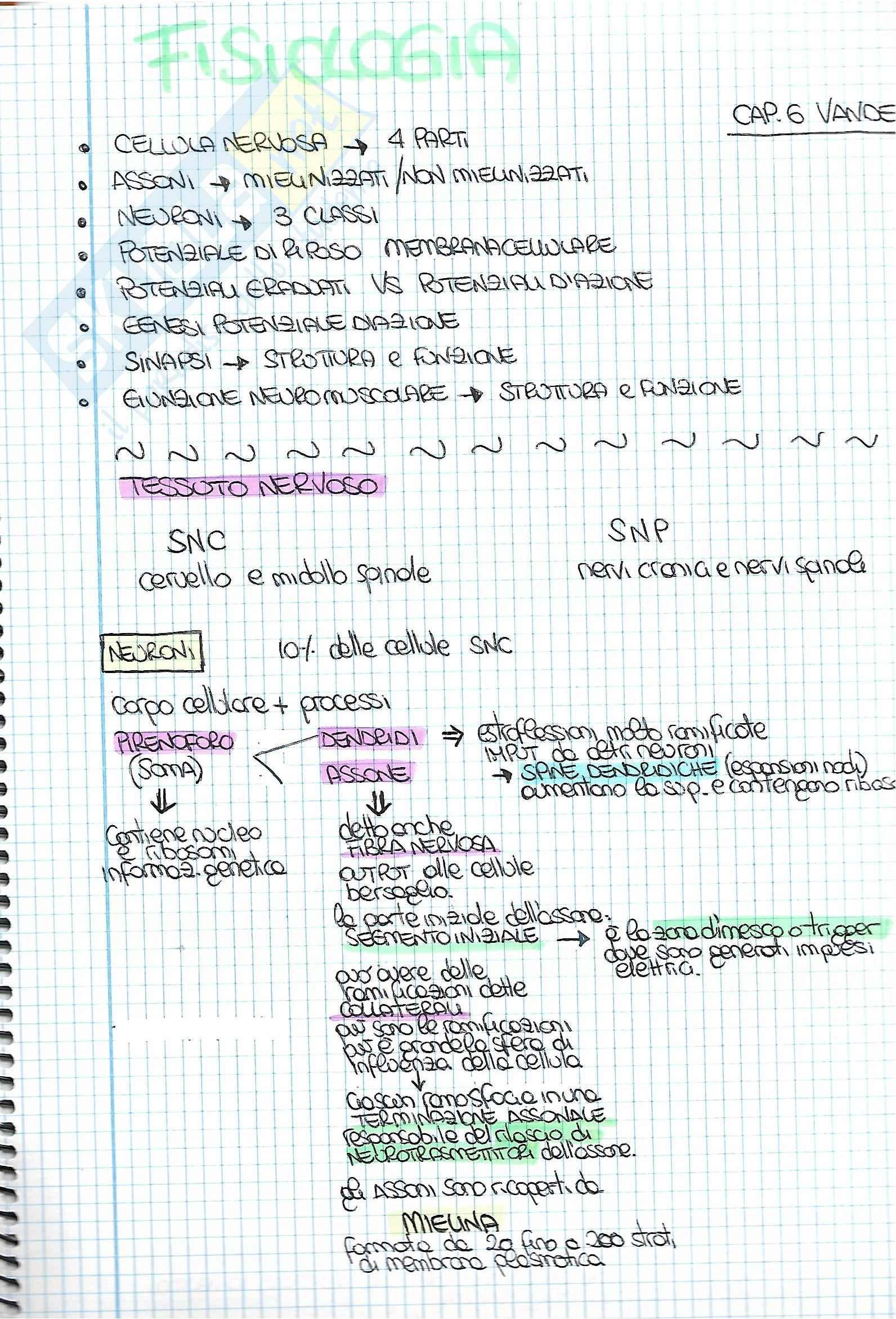 Riassunti dettagliati esame Fisiologia, prof. Macaluso, libri consigliati Fisiologia, Vander; Fisiologia dello Sport, Wilmore e Costill