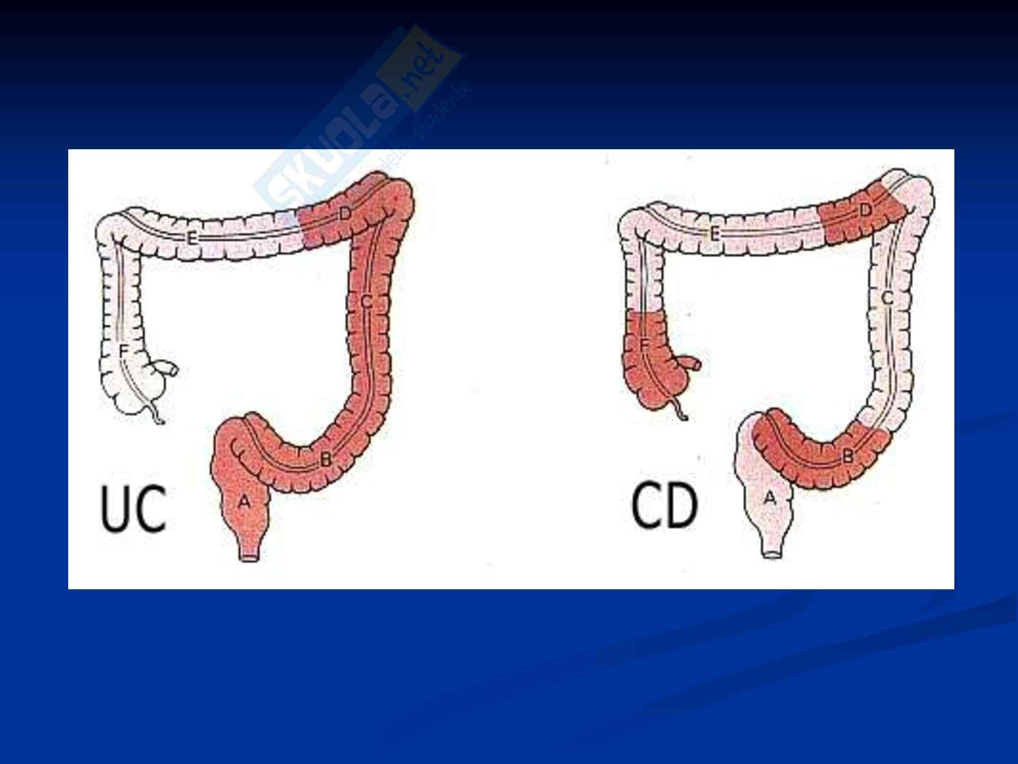 Anatomia umana - l'intestino Pag. 6