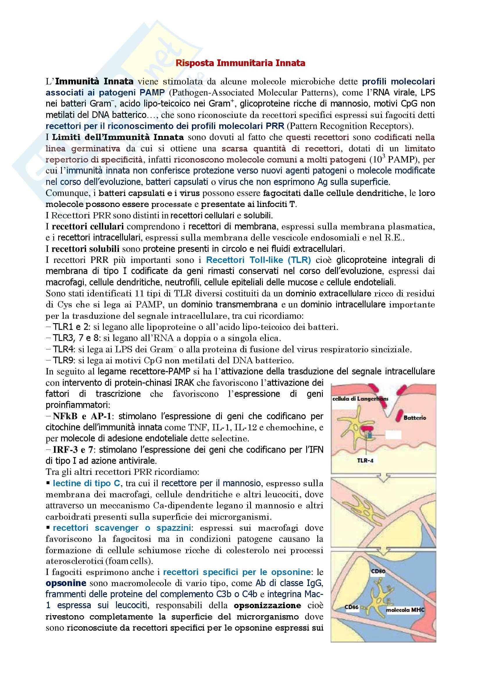Immunologia - risposta immunitaria innata