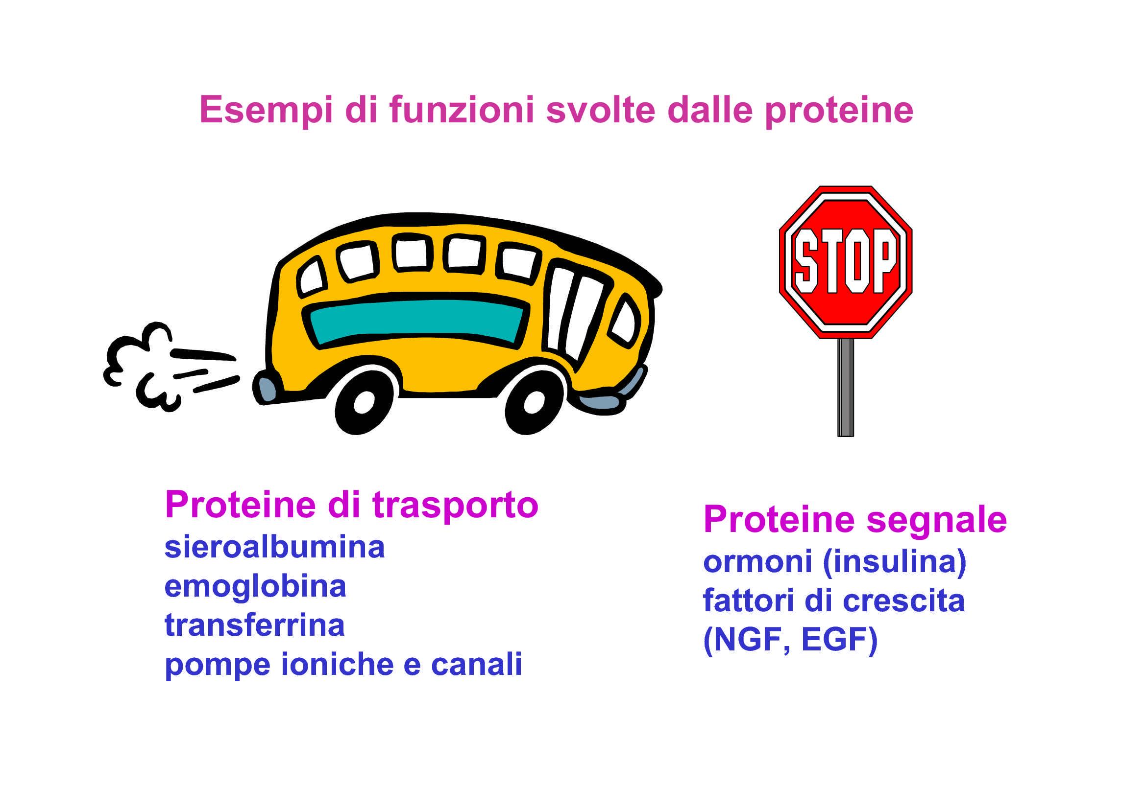 Proteine - Funzioni e strutture