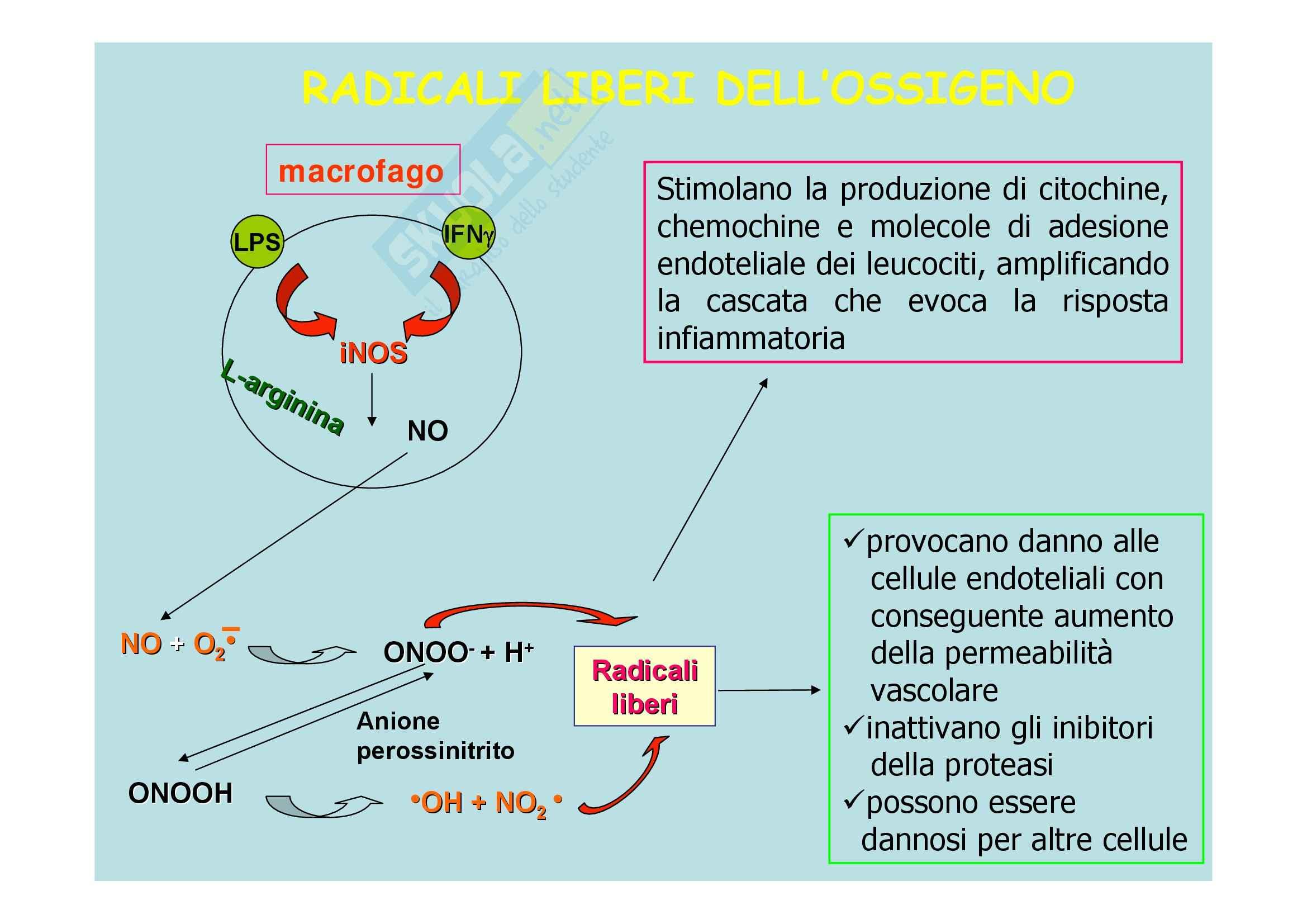 Patologia generale - molecole di adesione Pag. 31