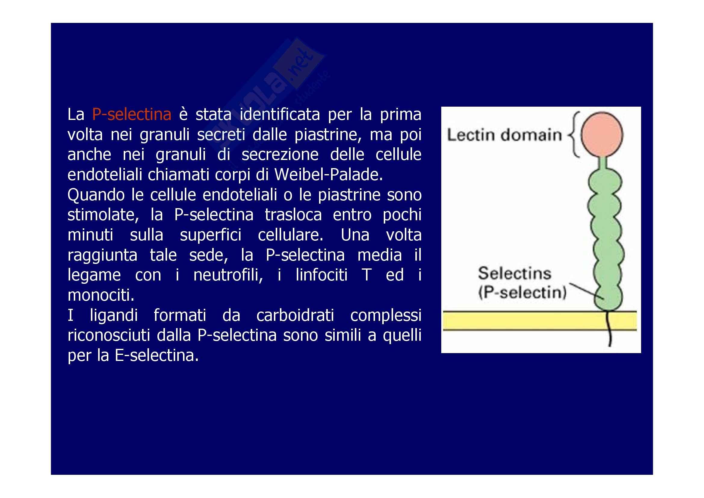 Patologia generale - molecole di adesione Pag. 6