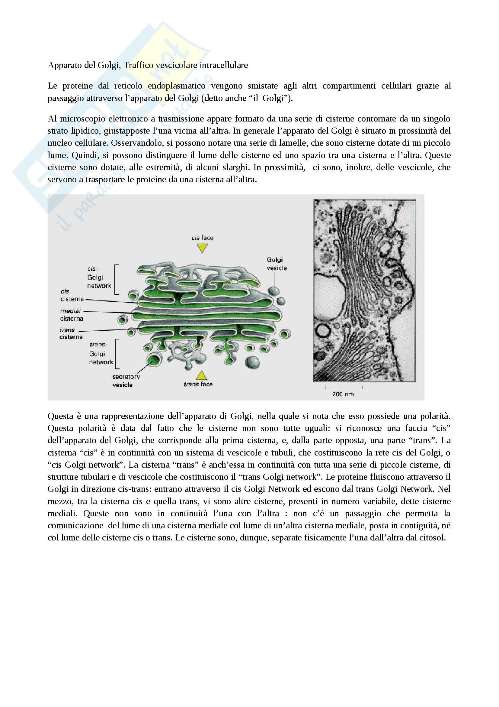 Citologia - apparato del Golgi e vescicole di trasporto transmembrana